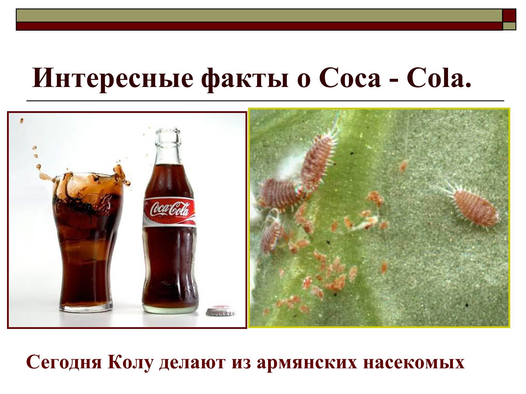 Кока-кола из чего делают фото