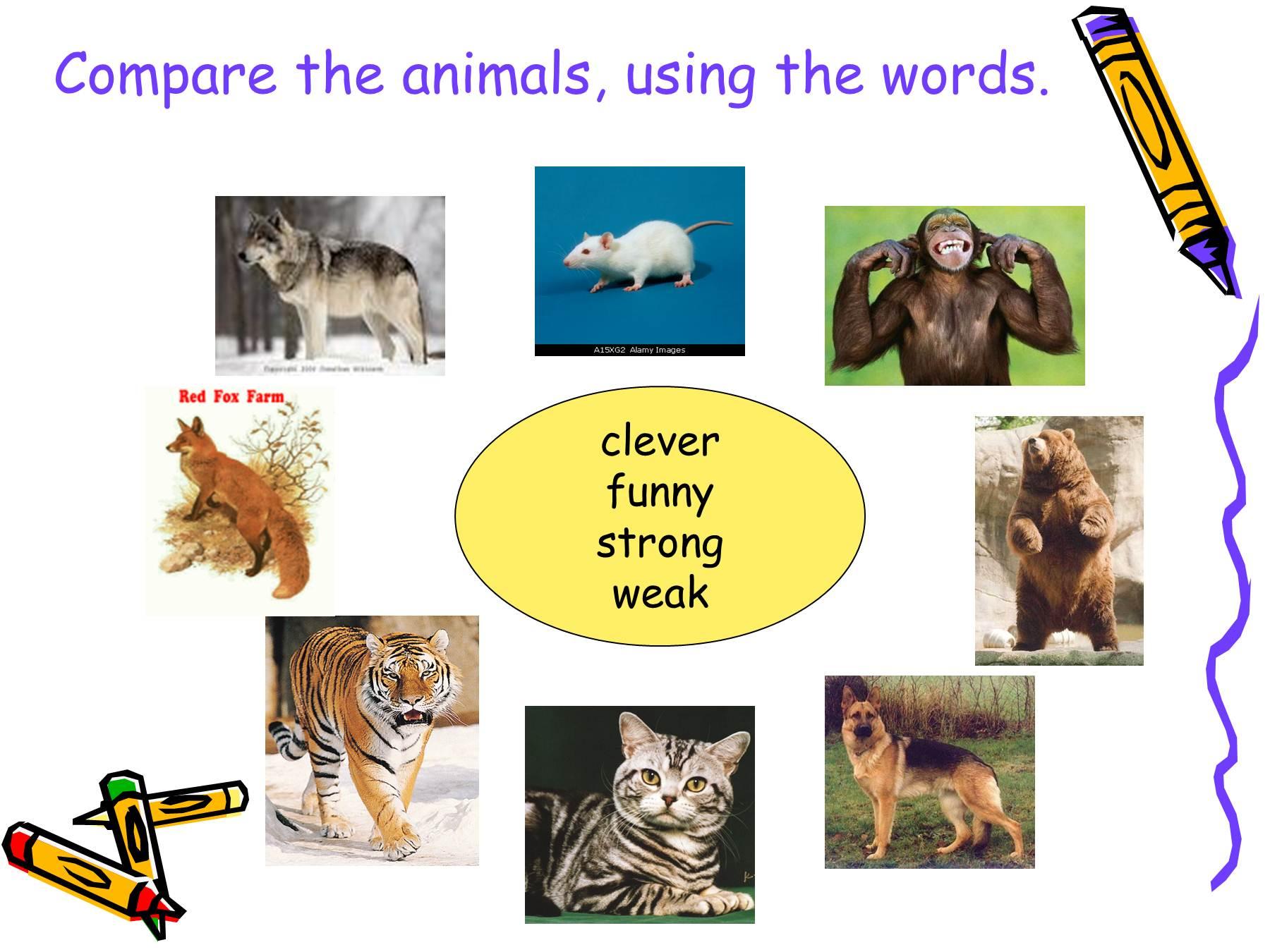 Как сделать доклад о домашних животных