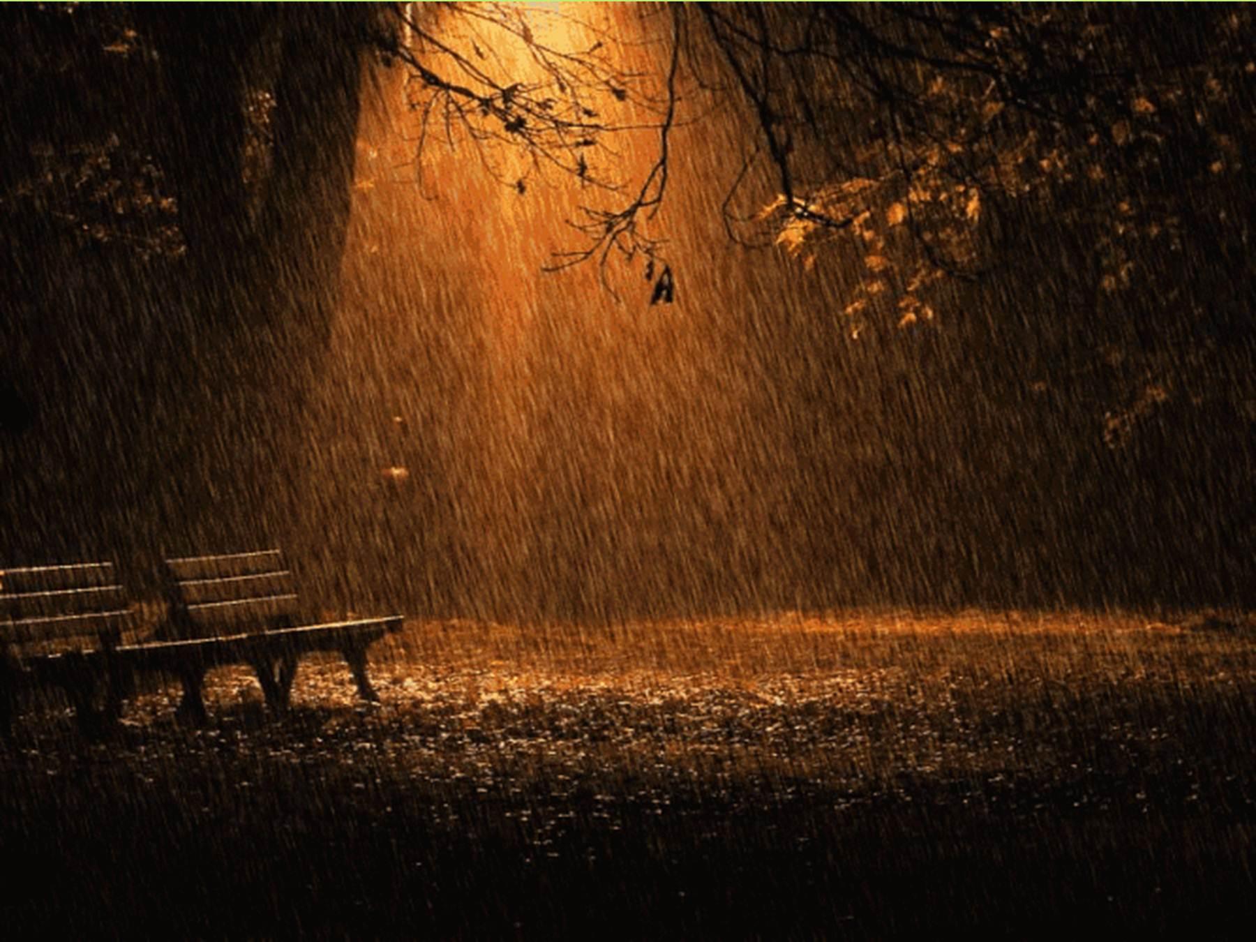 Яндекс золотой дождь 16 фотография