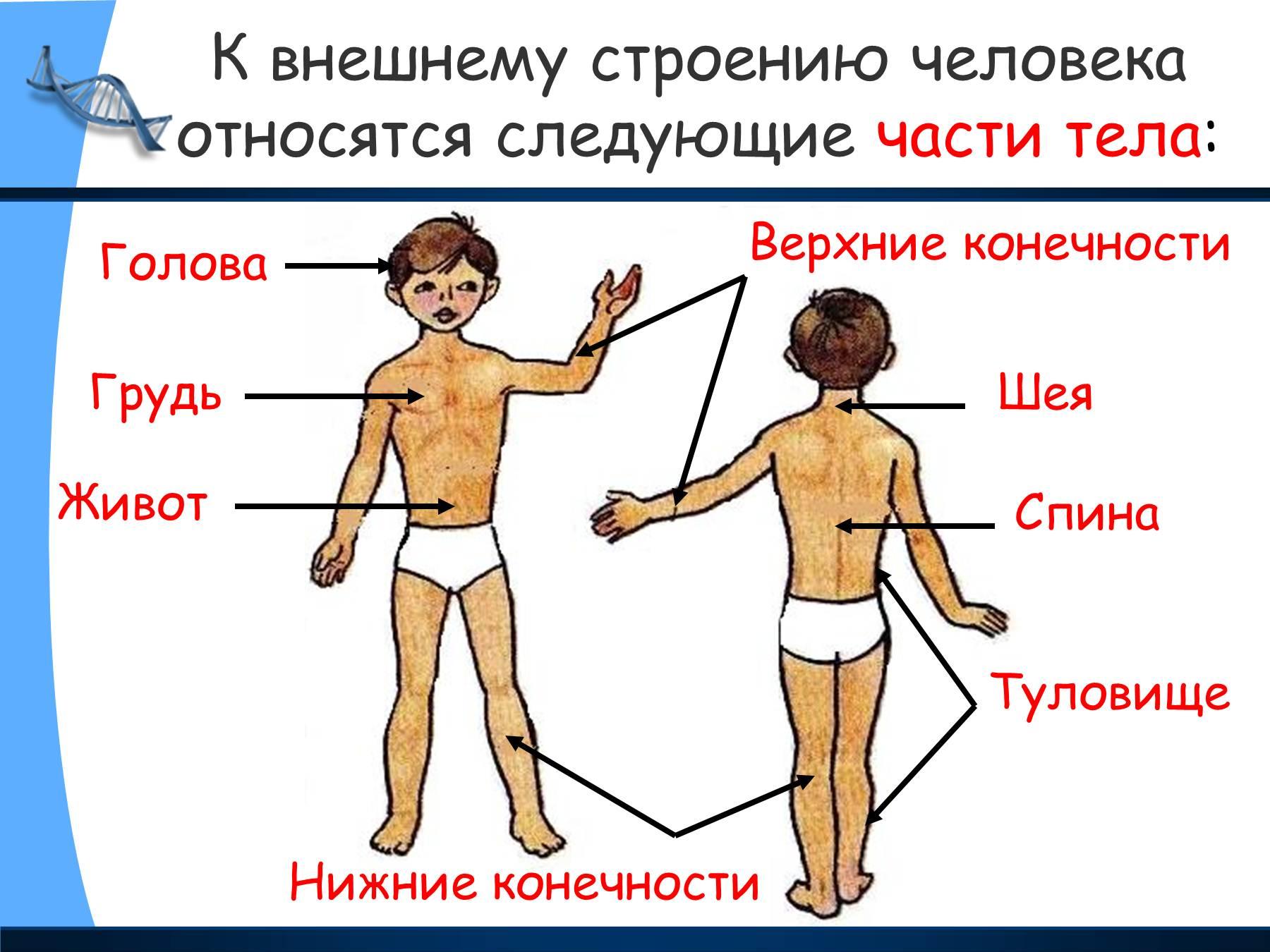 Уроки анатомии собственного тела в hd 12 фотография