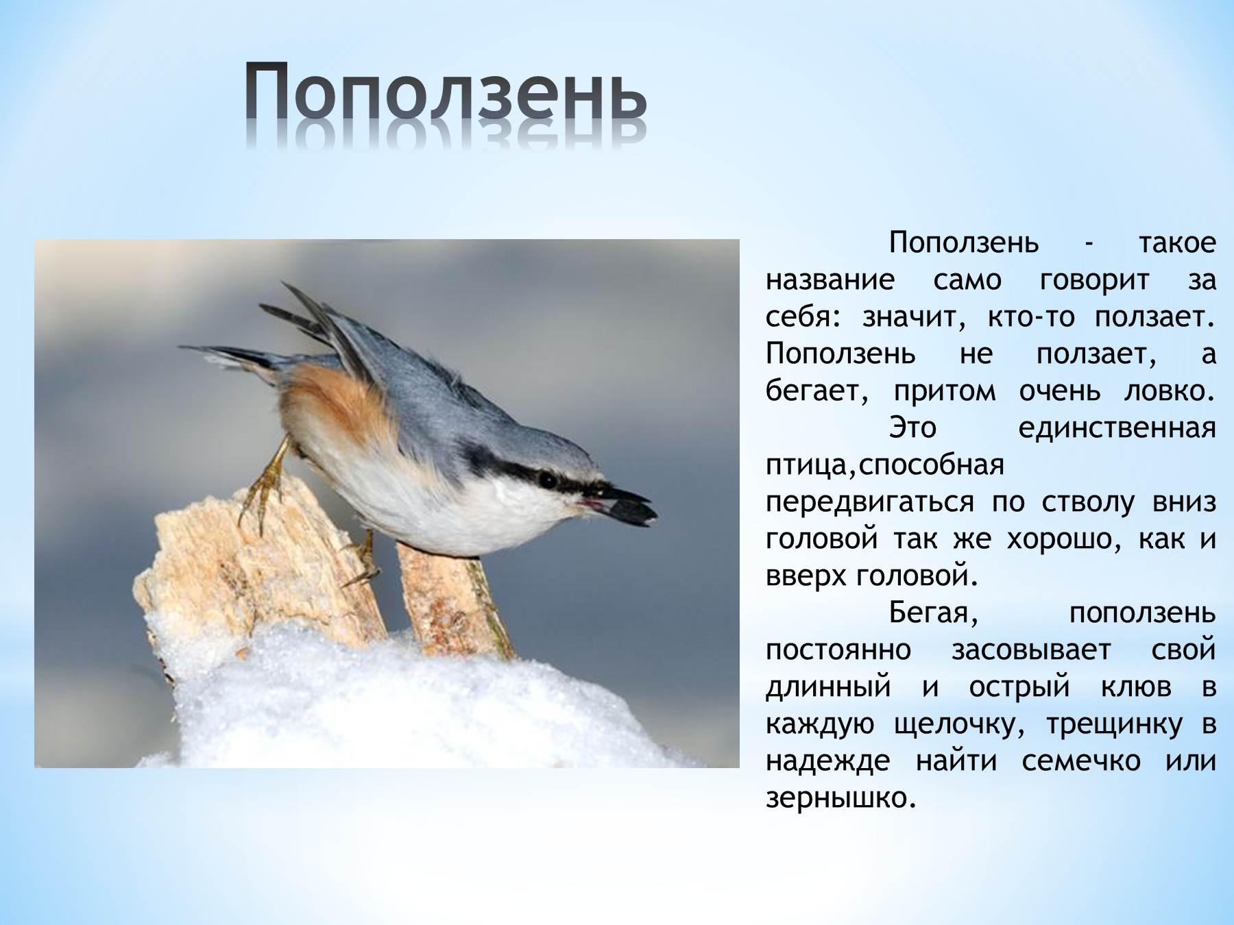 Все птицы фото и описание для детей