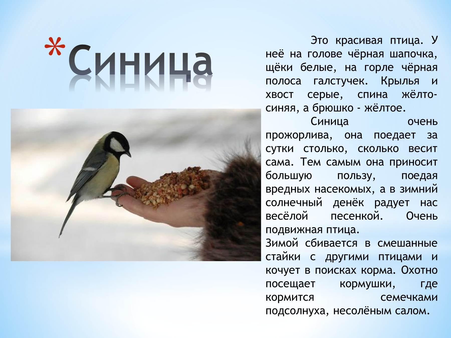Синица фото и описание для детей