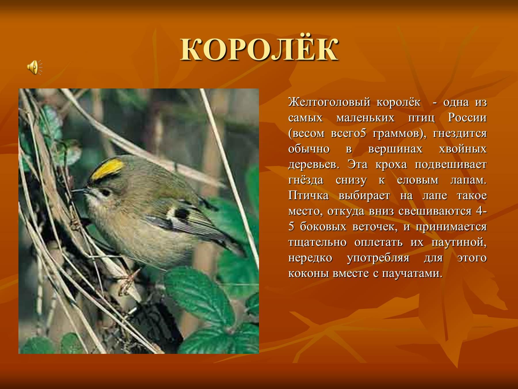 этого фото и рассказы о птицах туристы
