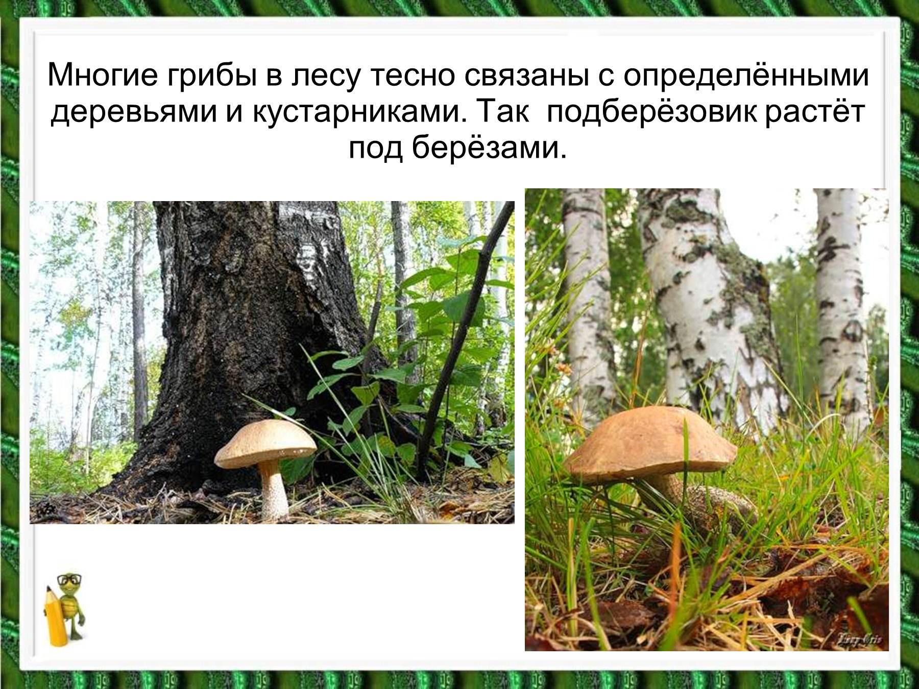 Связанную в лесу 3 фотография