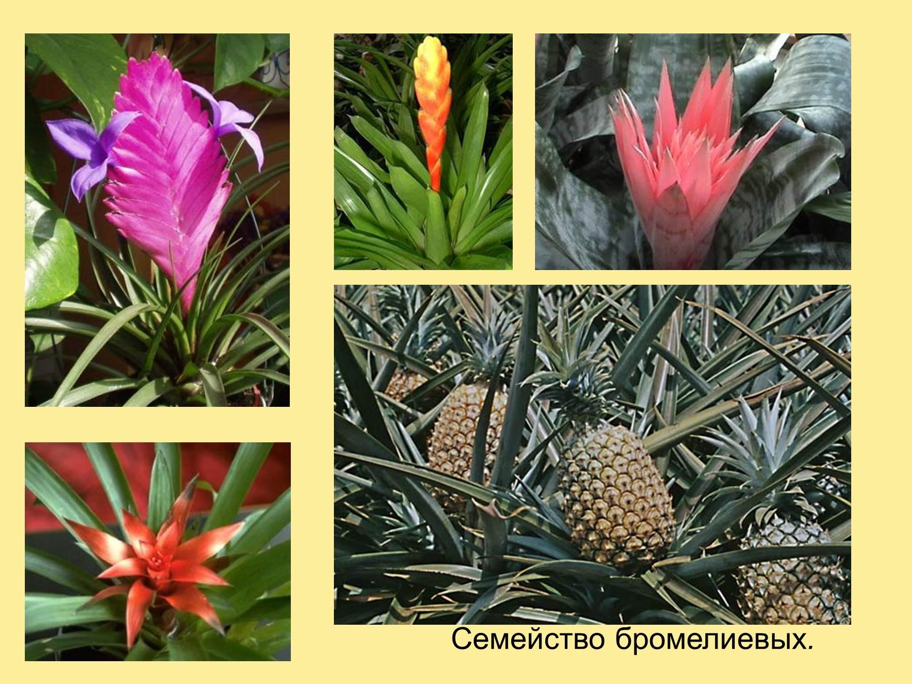 Комнатные цветы фото и названия Как ухаживать за