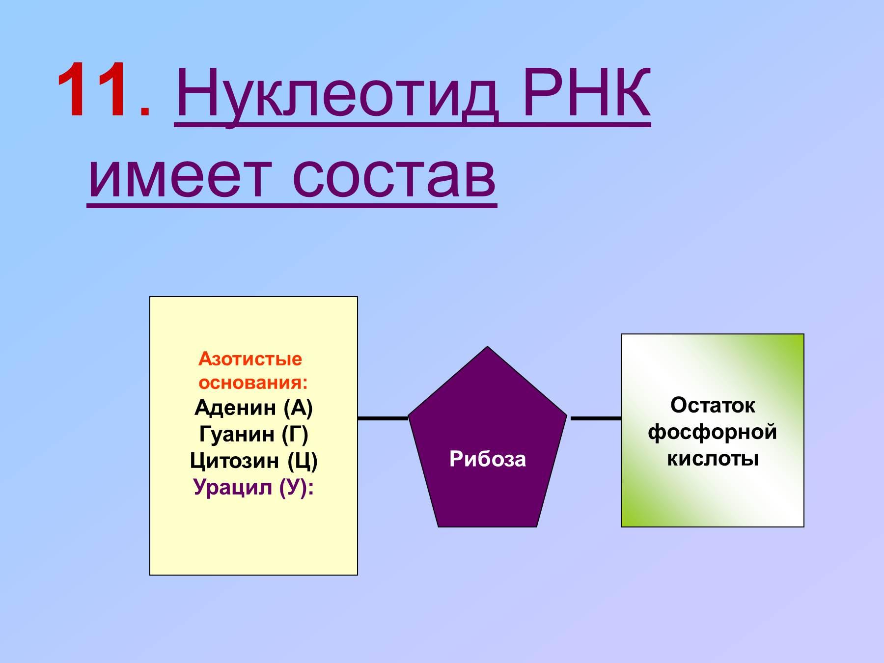 Схема строения нуклеотида днк и рнк