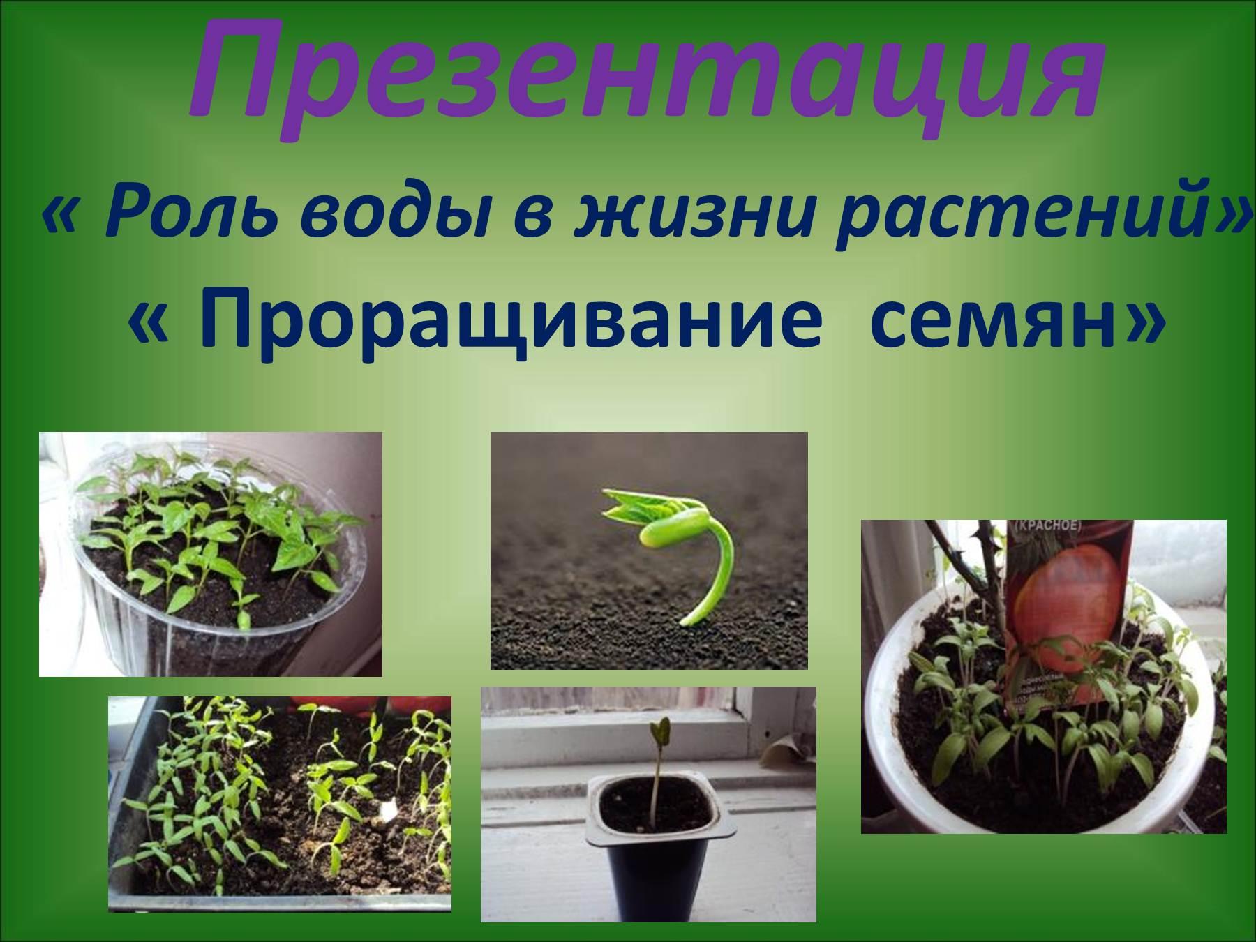 Рисунок растения в жизни человека 4