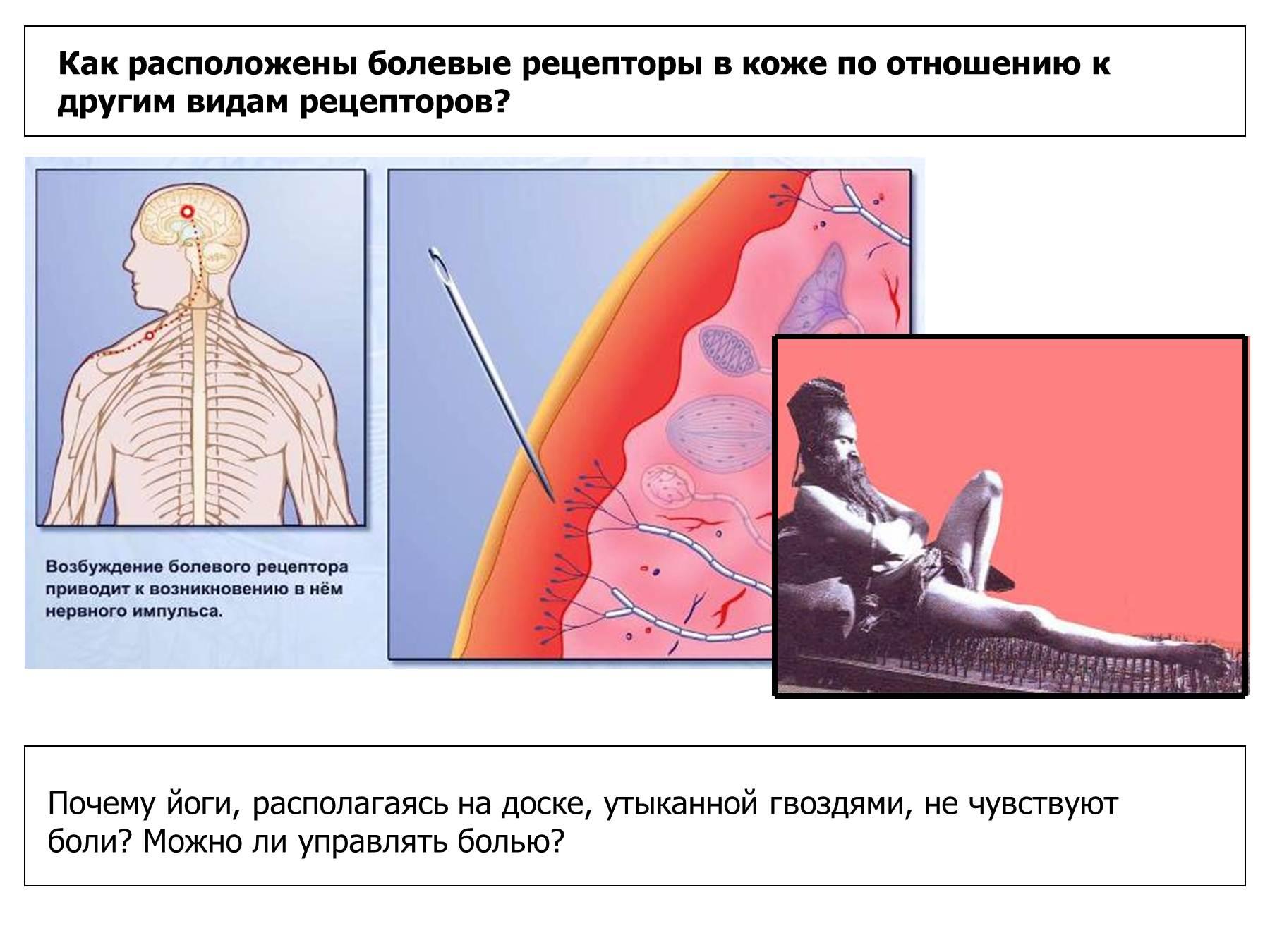 Тепловые рецепторы расположены в коже на глубине