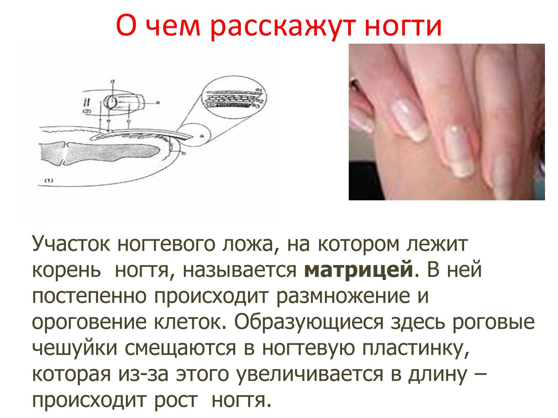 Как происходит рост ногтей