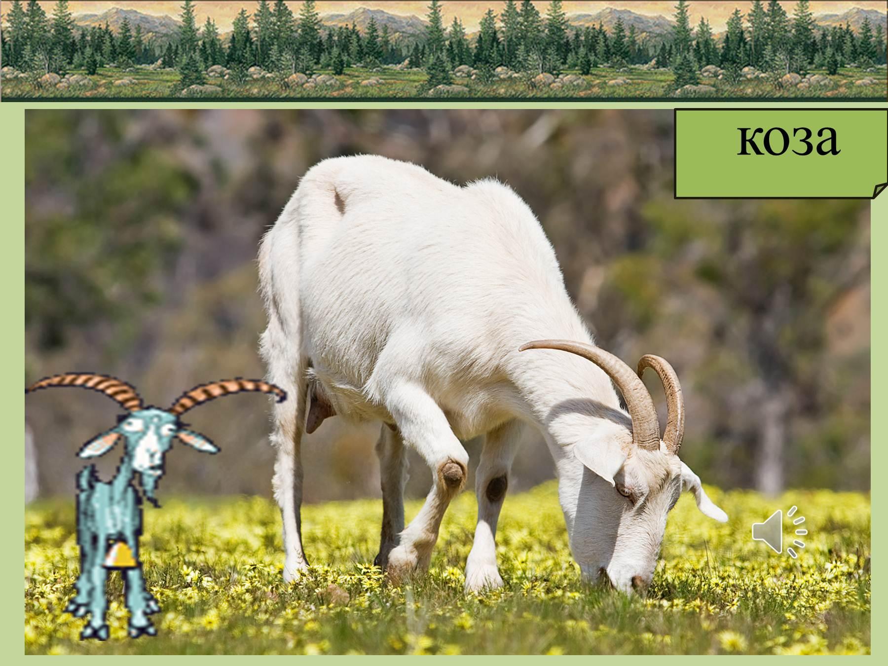 Трещина козы фото 23 фотография
