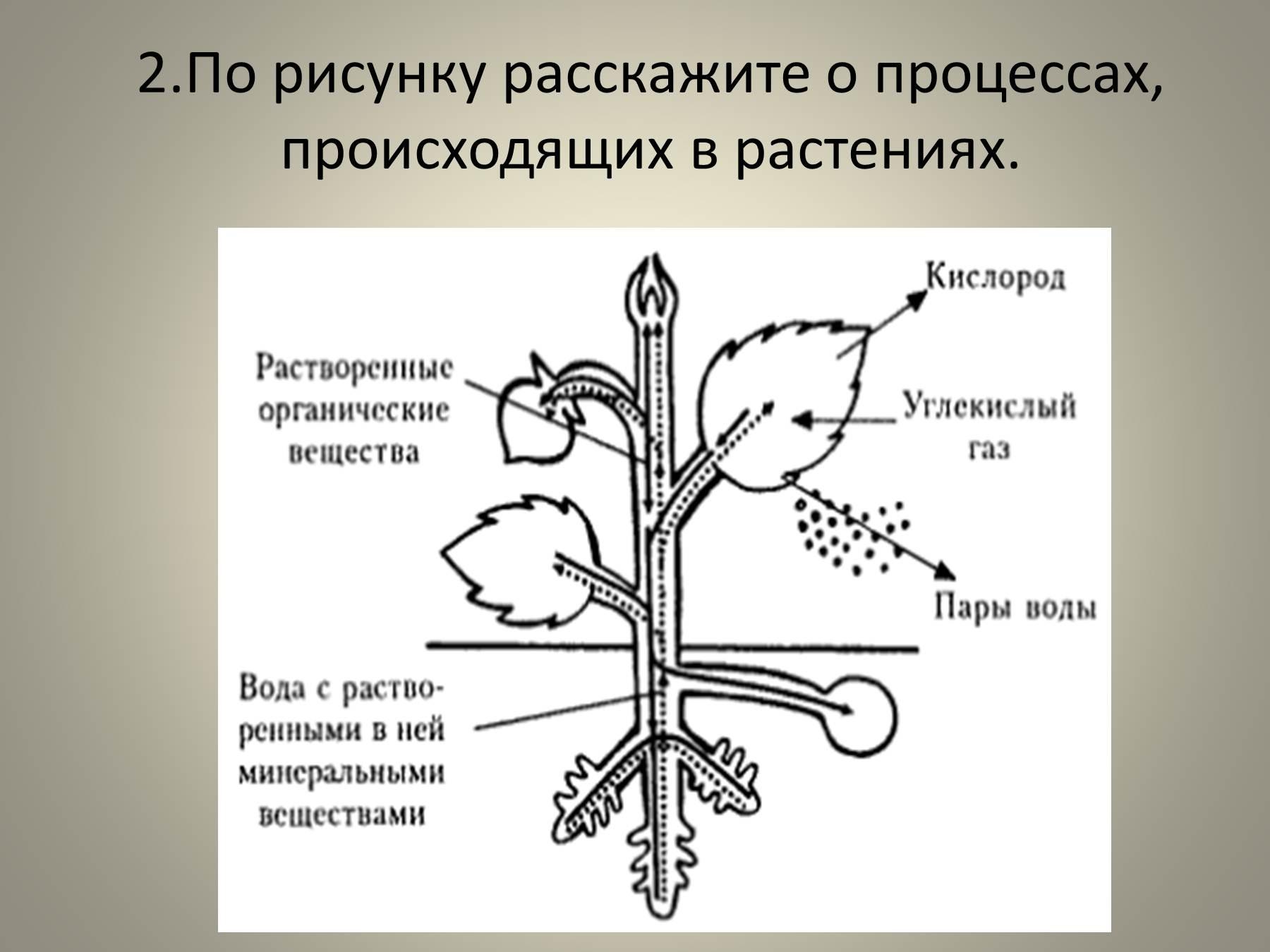 Изобразите схематически продвижение веществ поглощенных