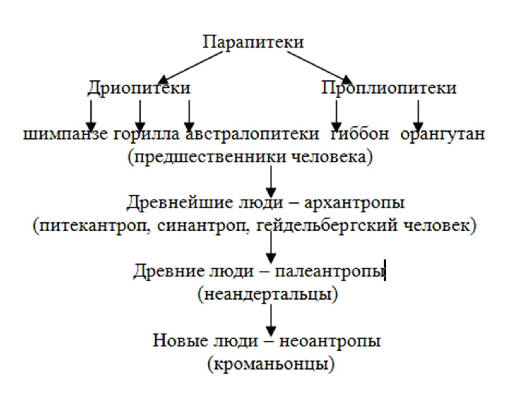 Происхождения и виды человека таблица