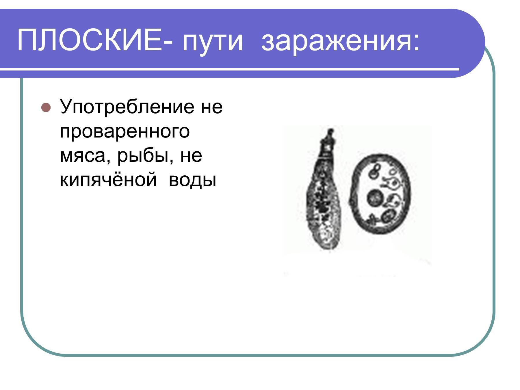 Таблетки от глистов лямблий для человека