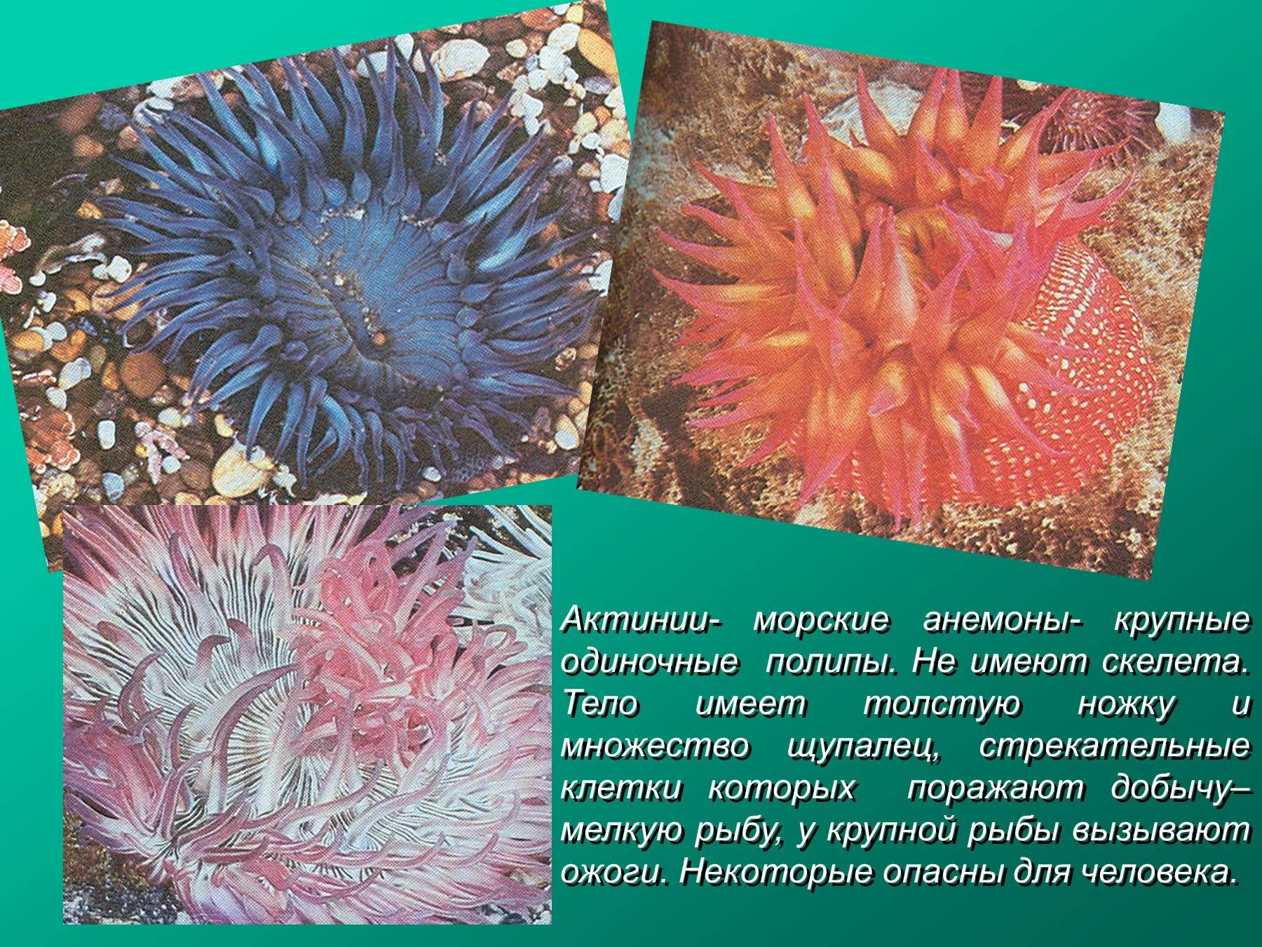 sredi-korallovih-polipov-est-germafroditi