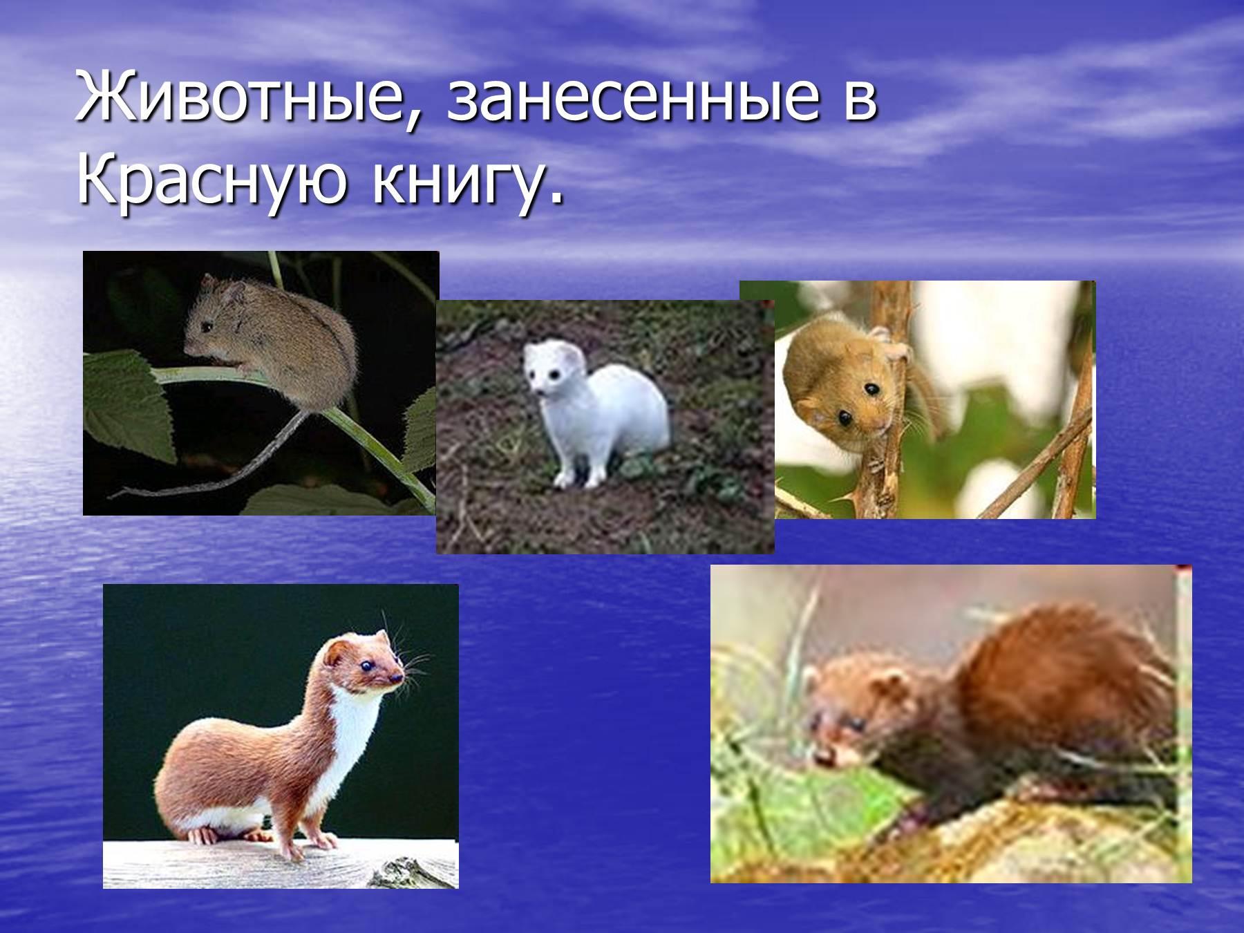 Животные занесенные в красную книгу рисунки 6
