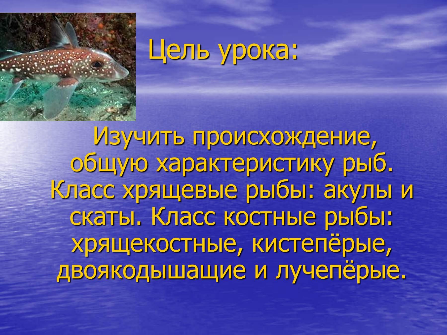 презентация глубоководные рыбы