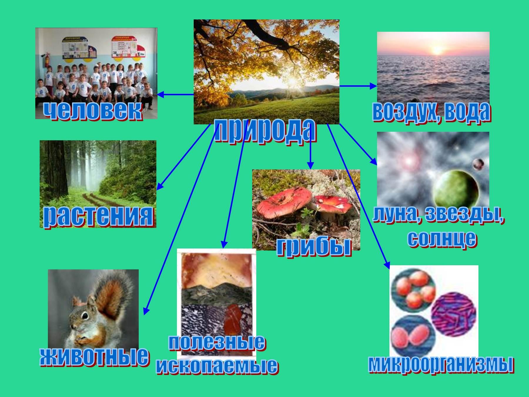Живая неживая природа картинки 6