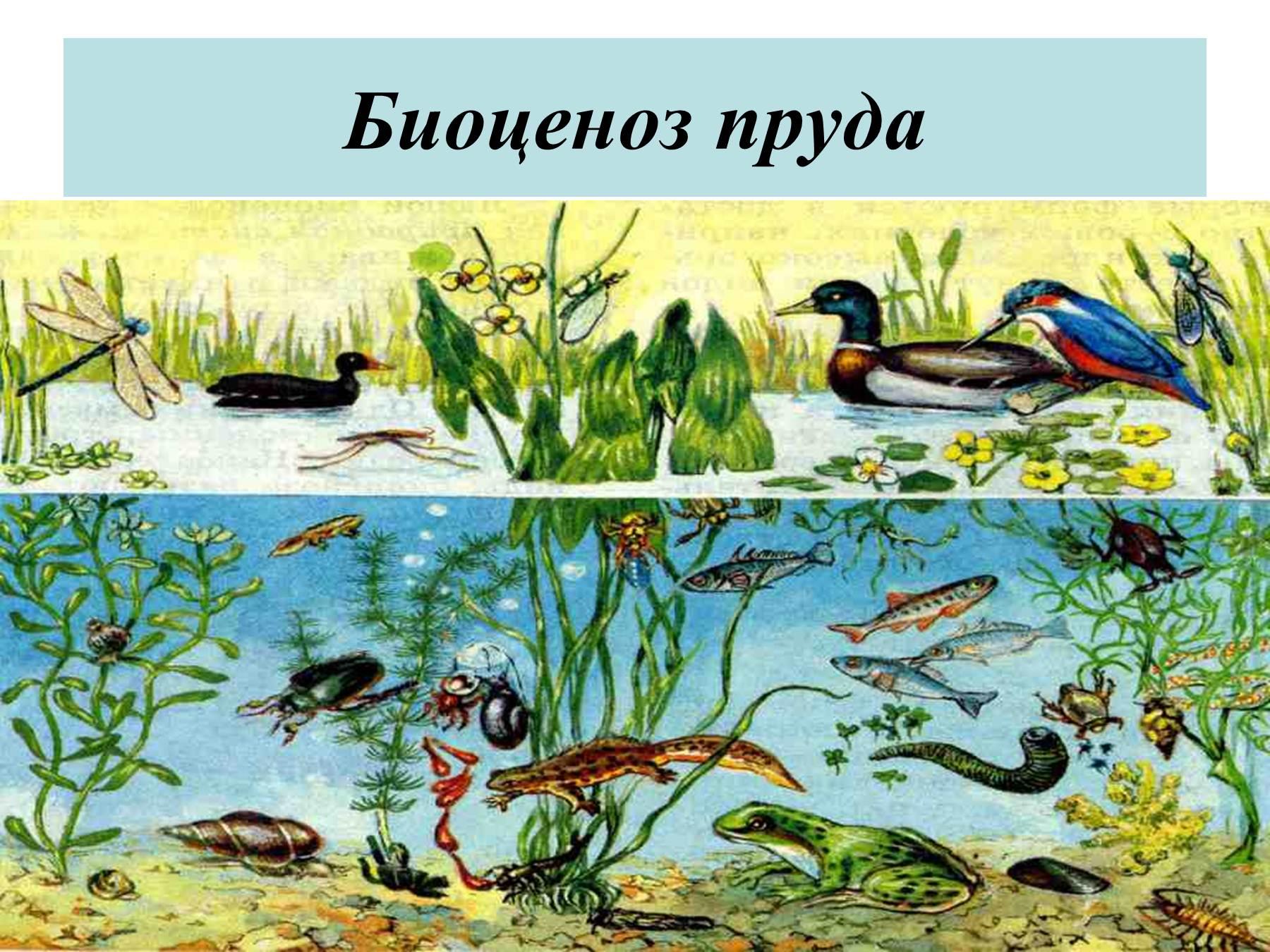 Рисунки природная экосистема взаимосвязи растения животных и грибы 4