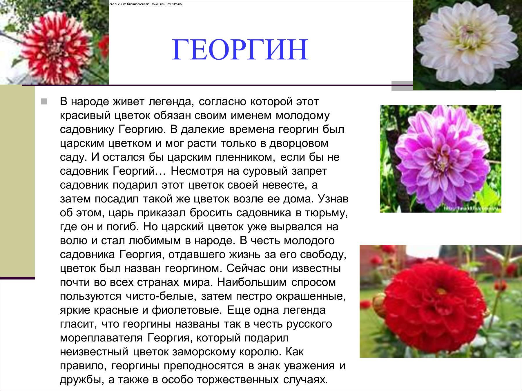 Фото и краткая информация о цветах
