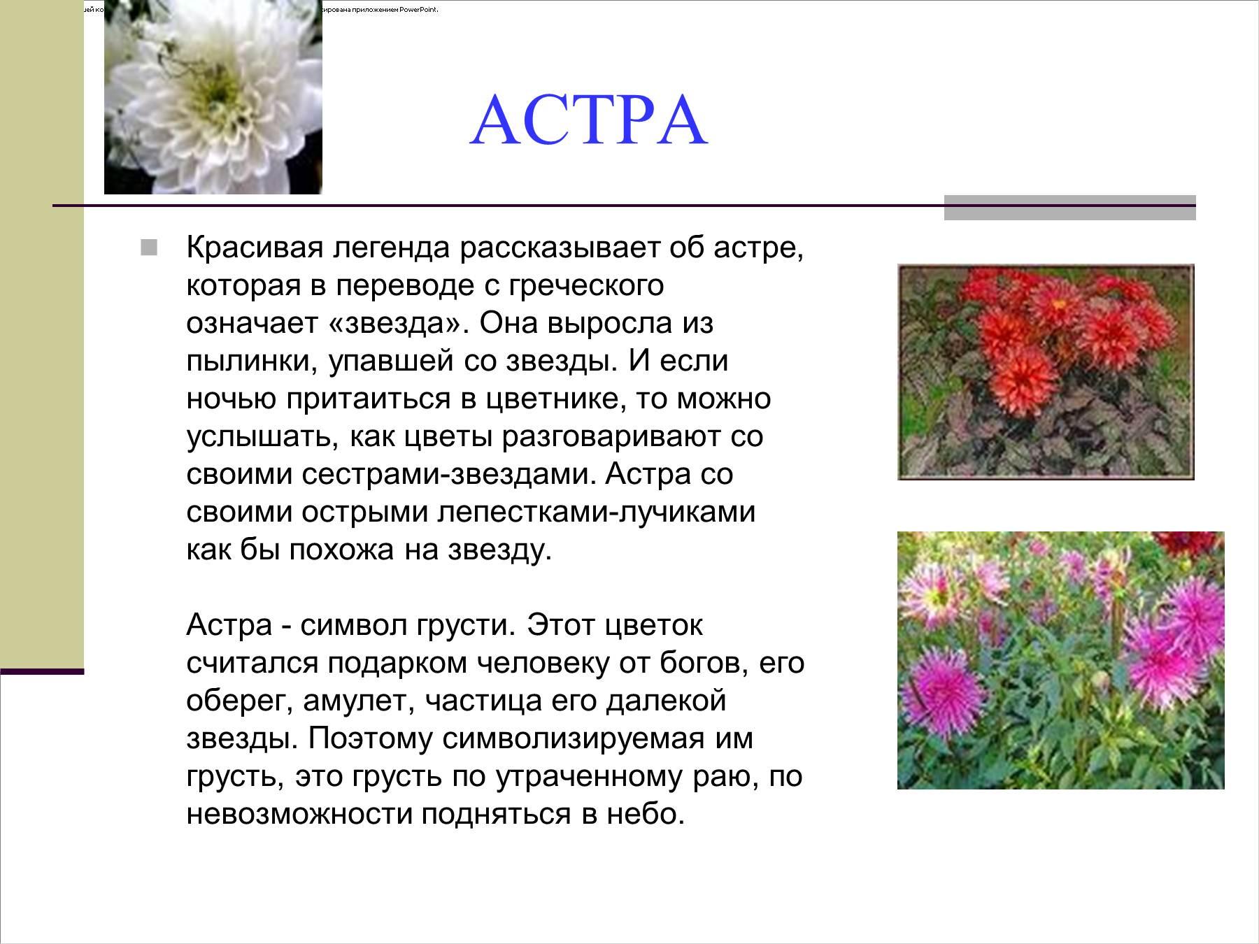 Цветы и их описание