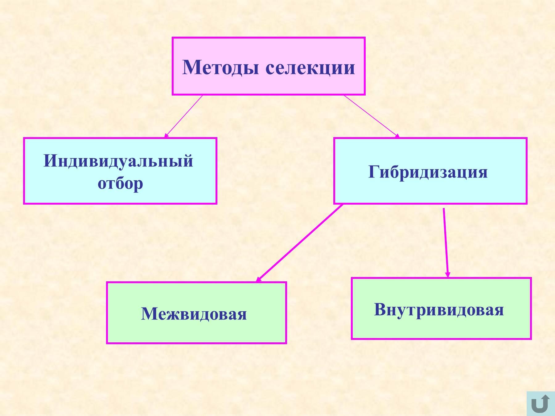 Схема искусственного отбора