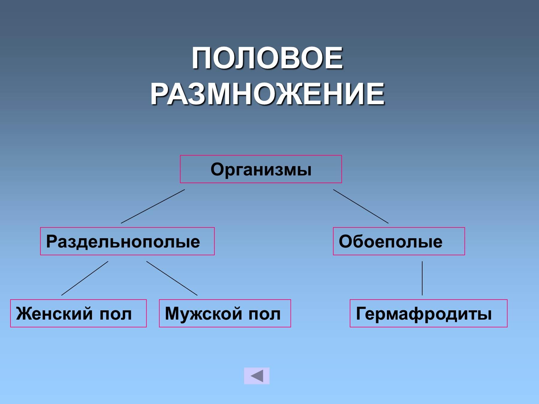 germafroditi-stroenie