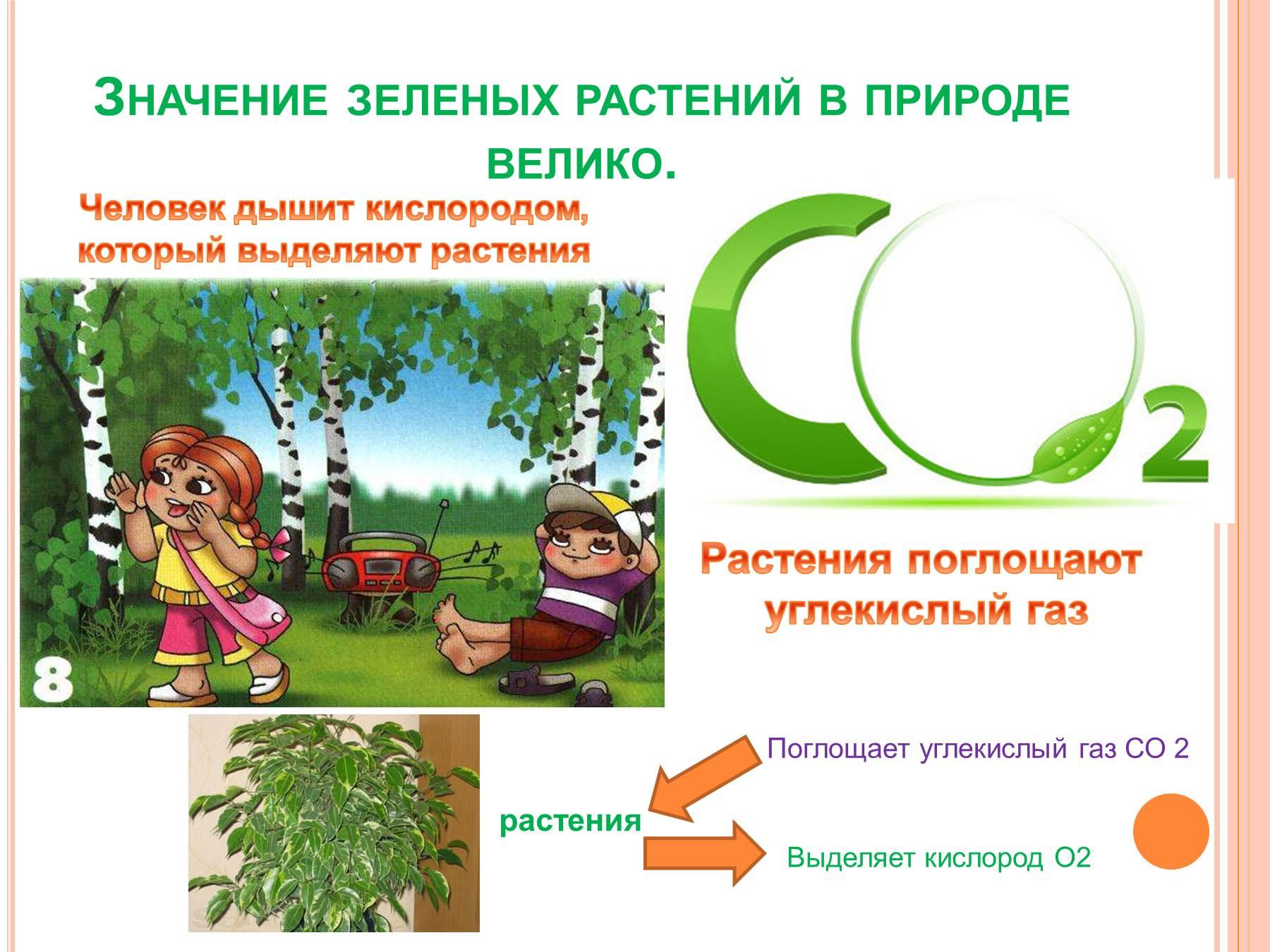 Рисунок растения в жизни человека 2
