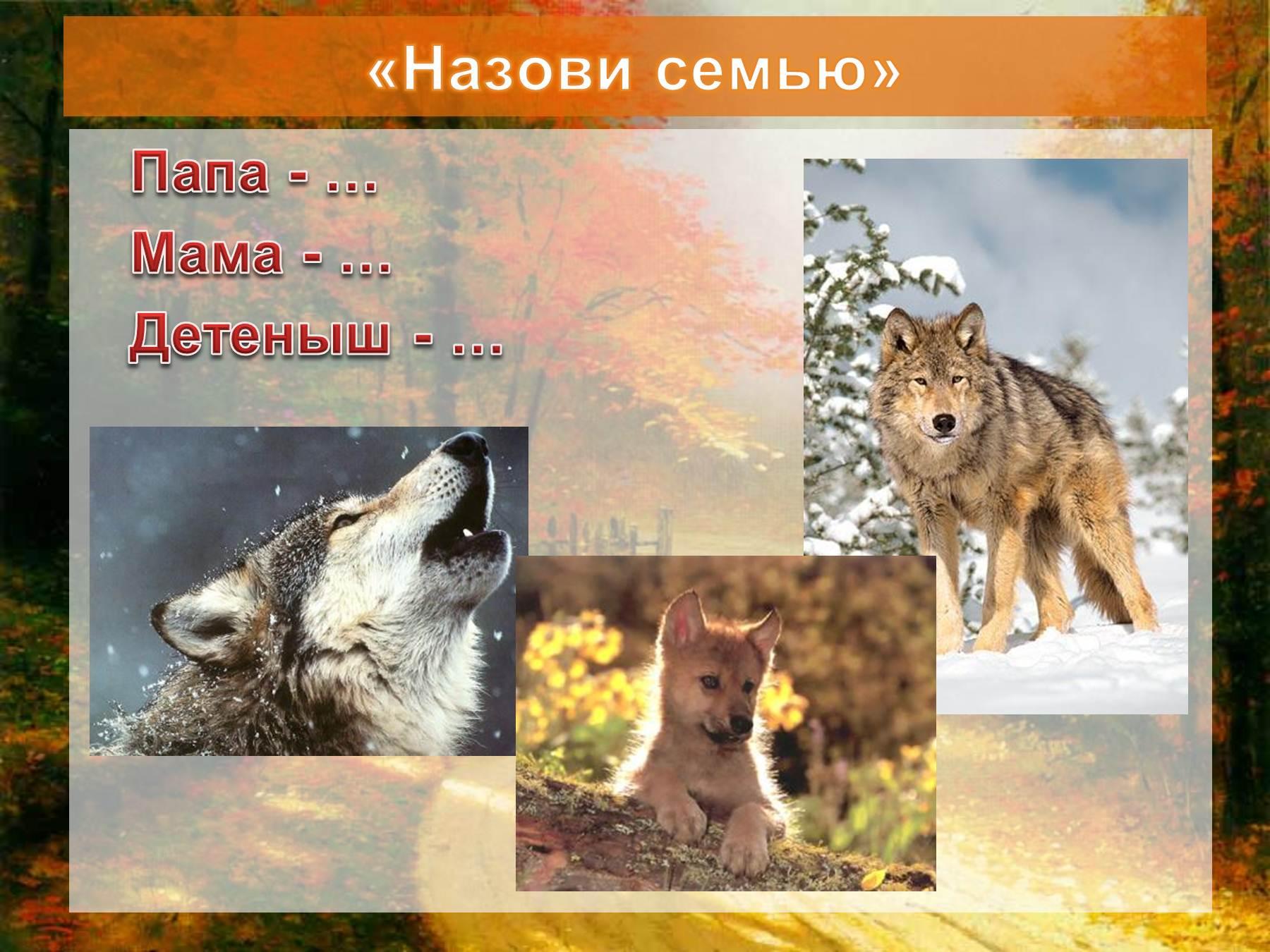 дикие животные урала фото и описание родина бекеши добавляем