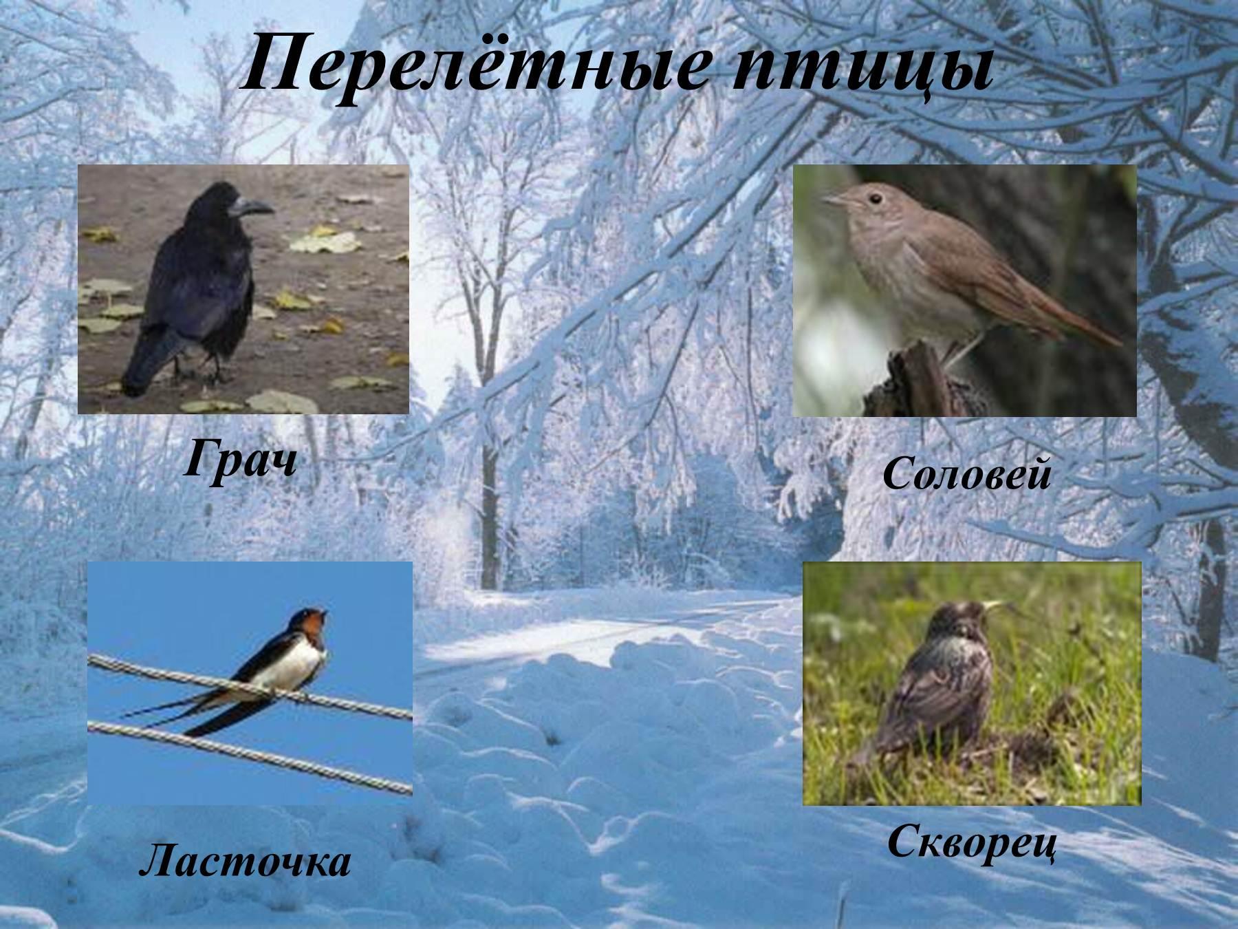 Перелётные птицы названия для детей фото