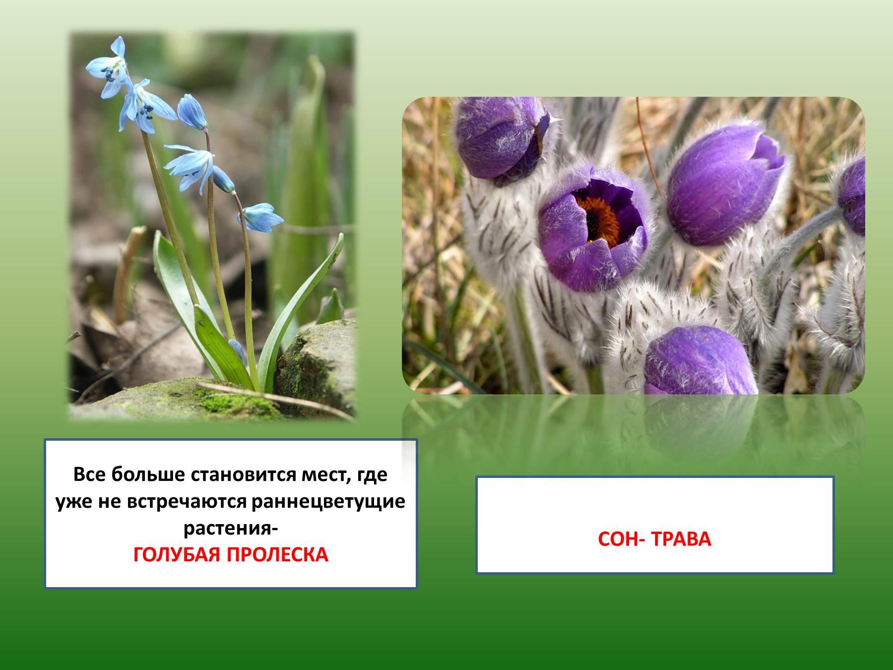 Фотографии растений которые нуждаются в охране