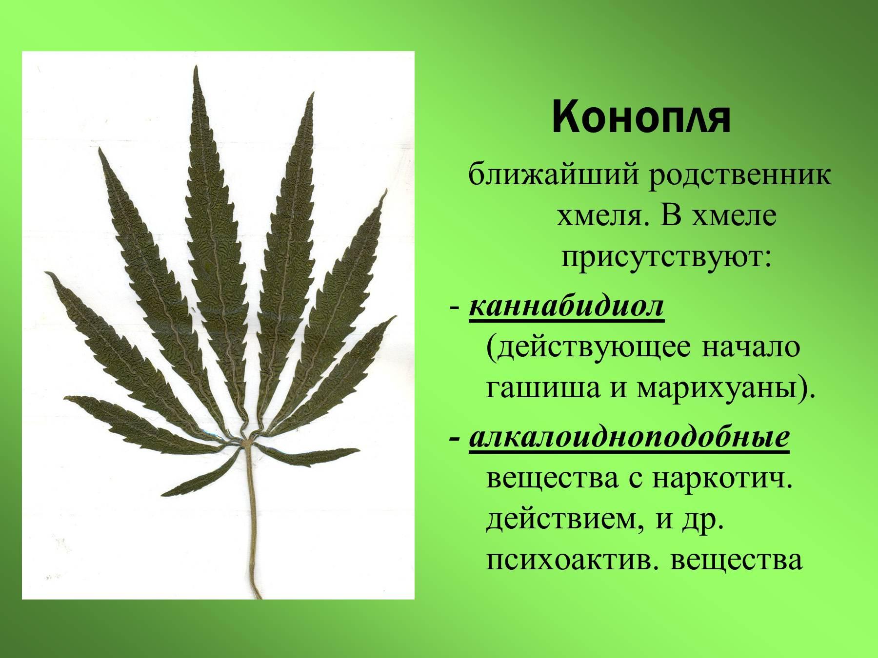 Марихуана вредна тем приспособления для курения марихуаны