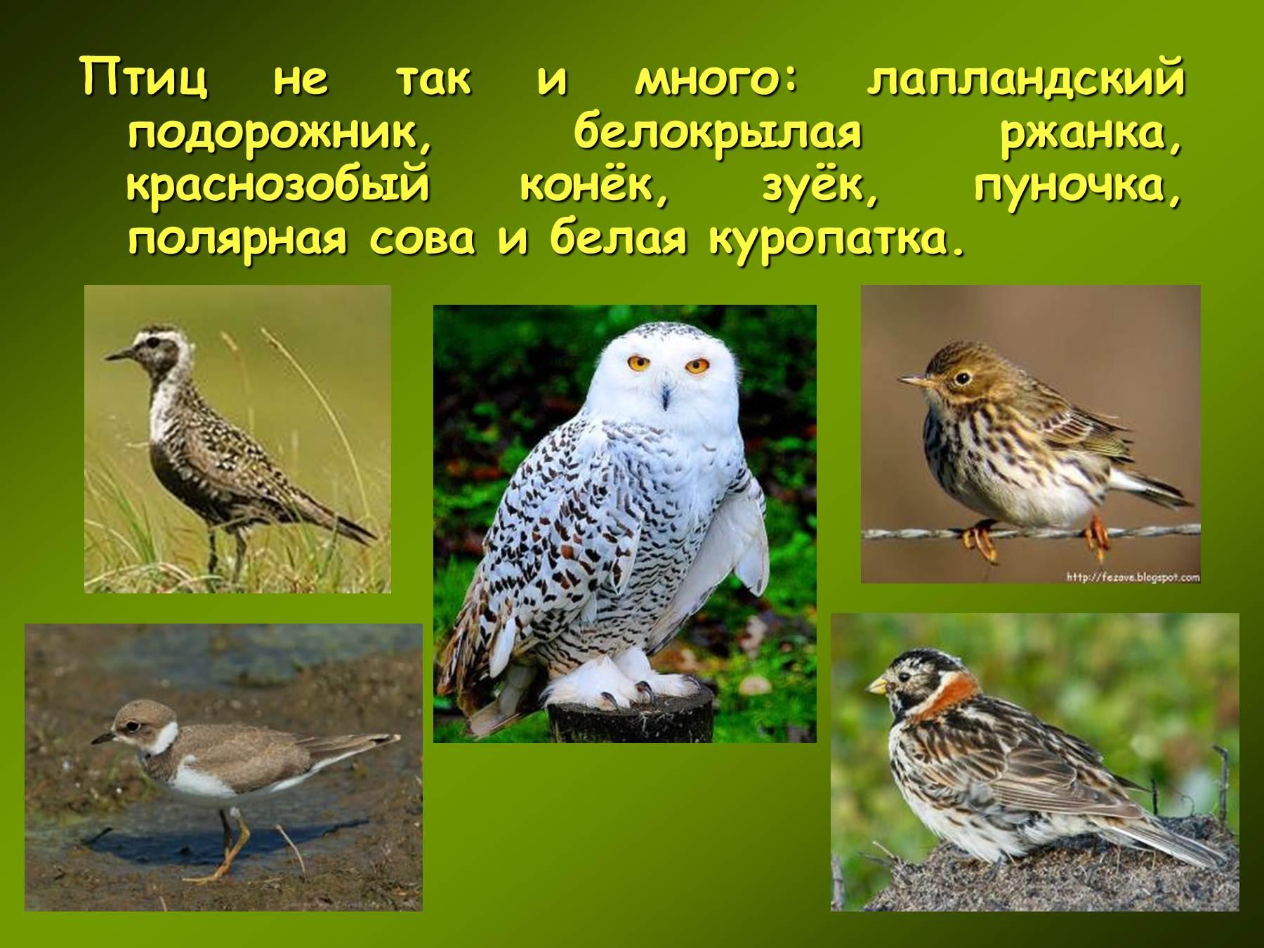То обстоятельство, что птицы обладают весьма совершенным способом передвижения — полетом, отнюдь не сглаживает различий между фауной отдельных районов.