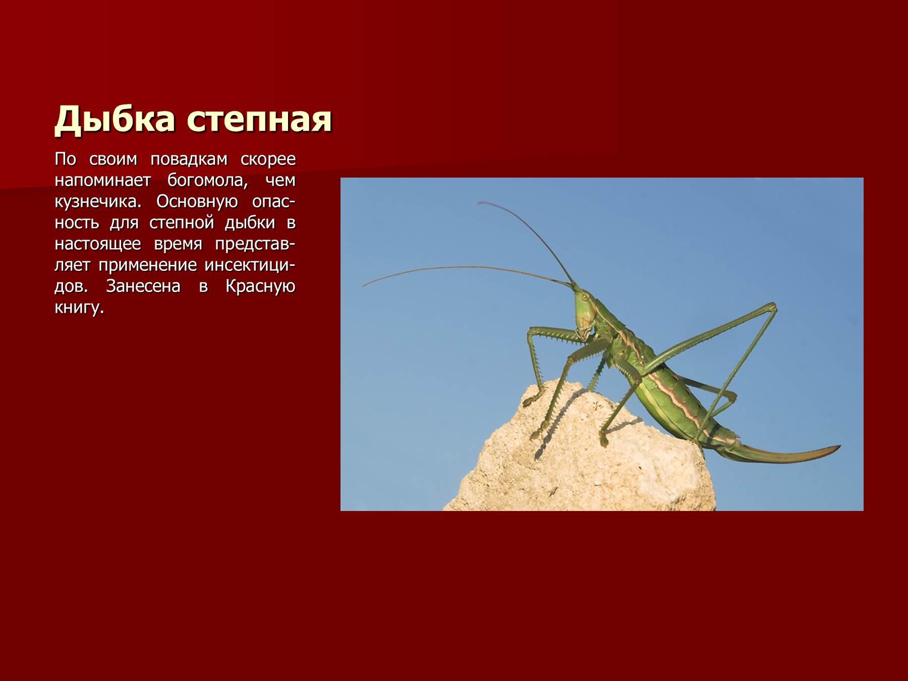 Красная книга оренбургской области скачать