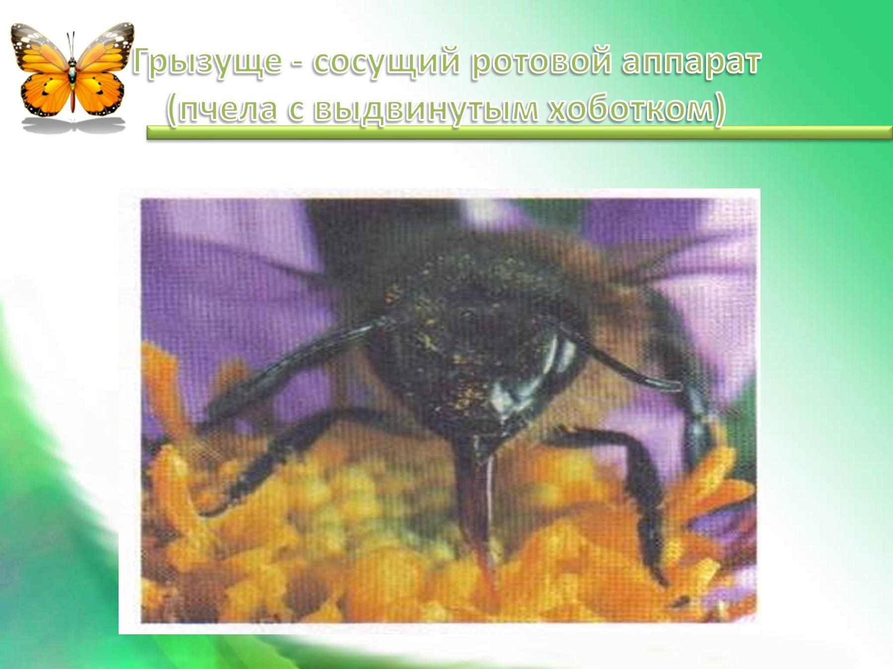 sosushiy-rotovoy-apparat