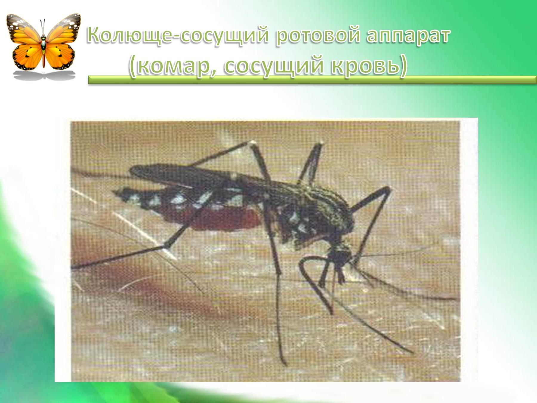 grizushe-lizhushiy-rotovoy-apparat-imeet