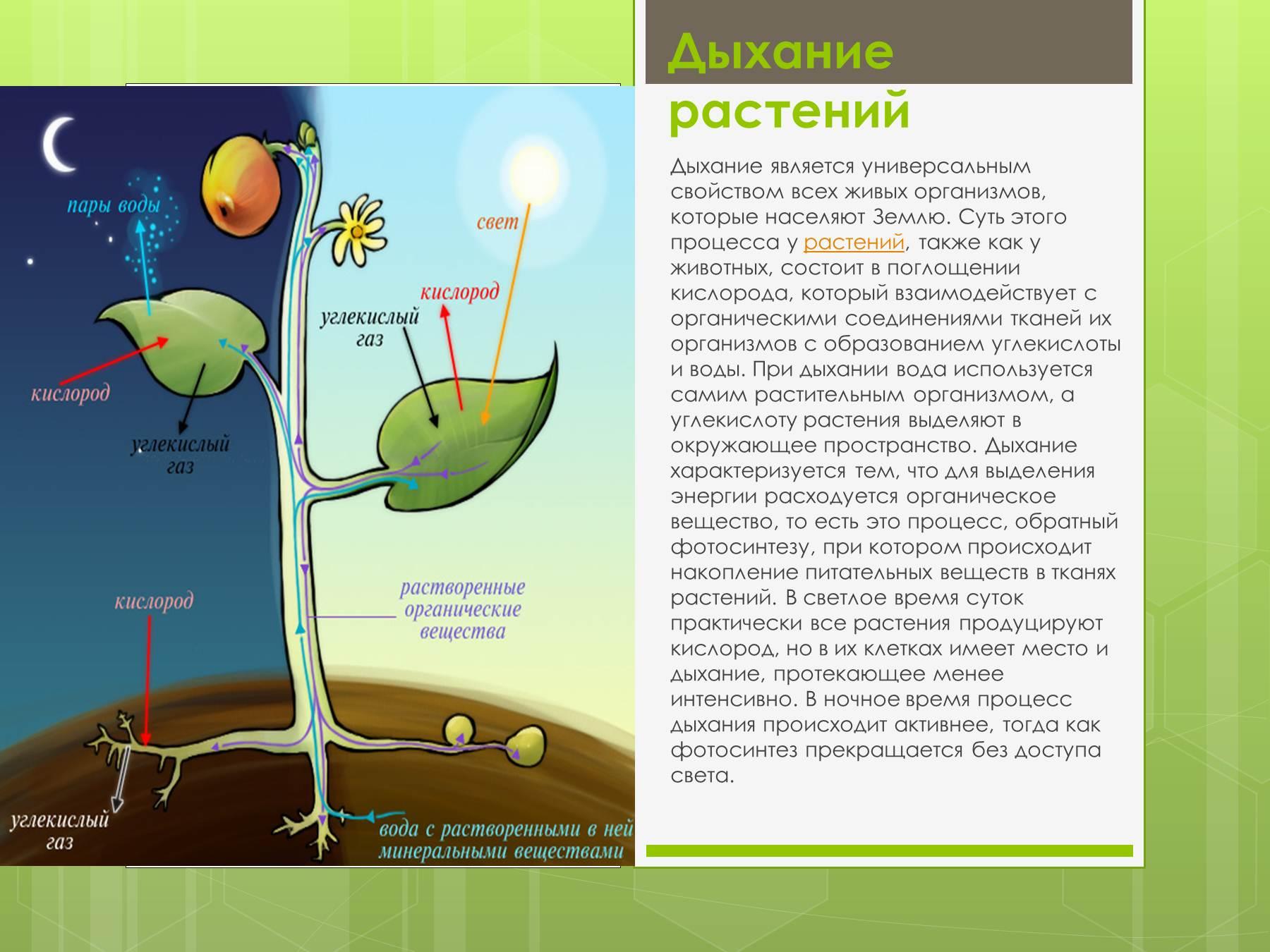бузова фотосинтез как свойство растений вирусное заболевание