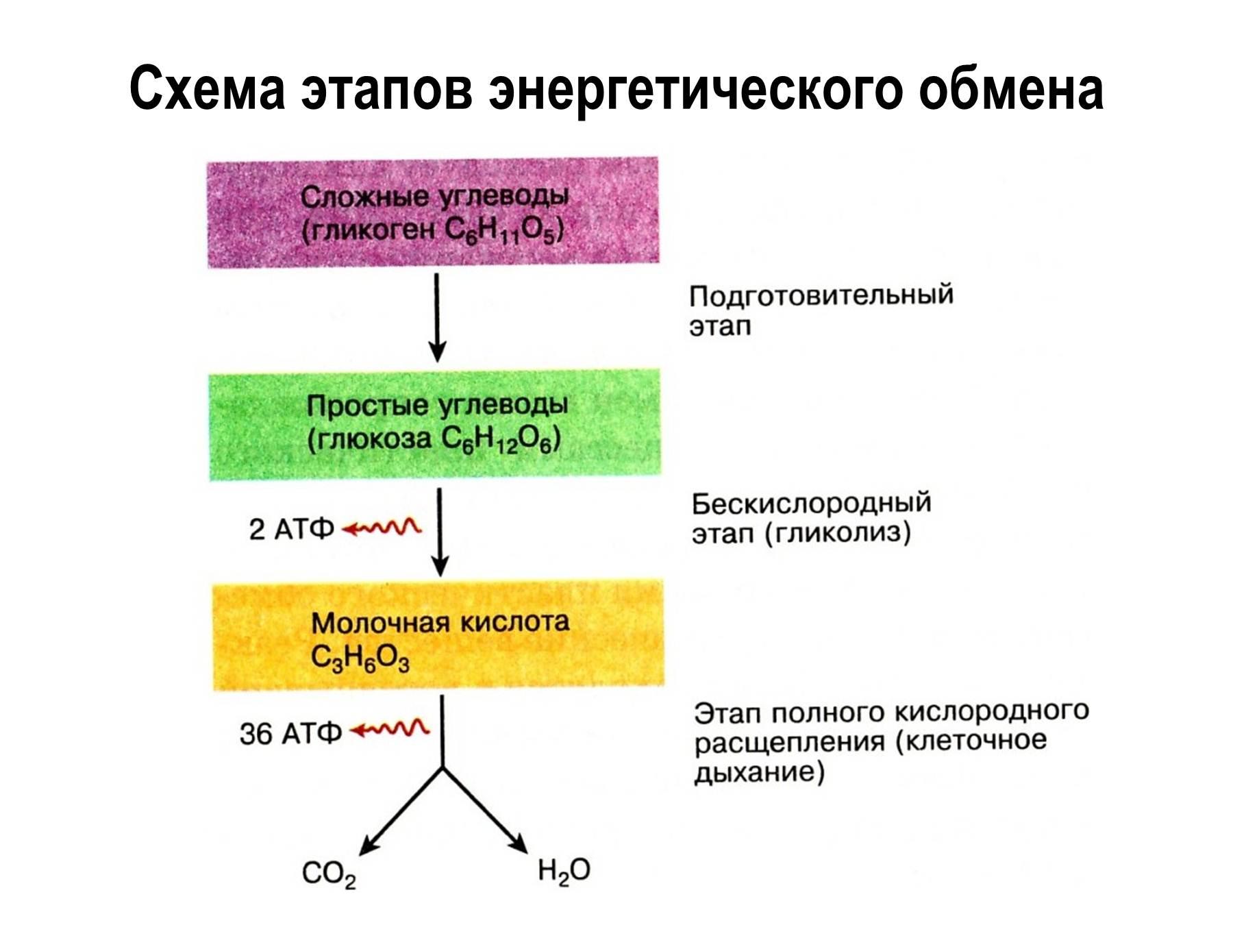 Почему фотосинтез относят к пластическому обмену
