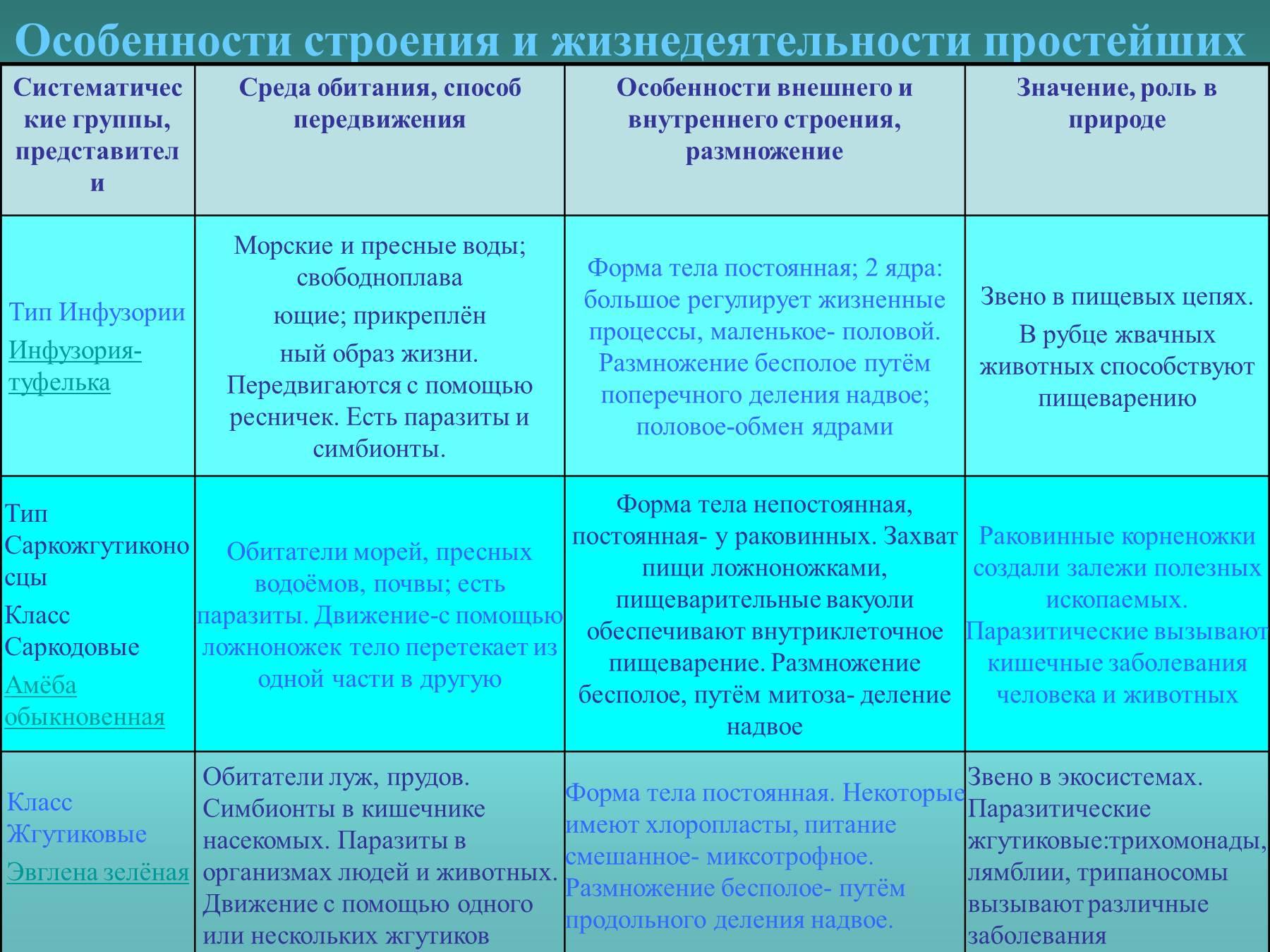 Инфузории особенности строения и процессов жизнедеятельности