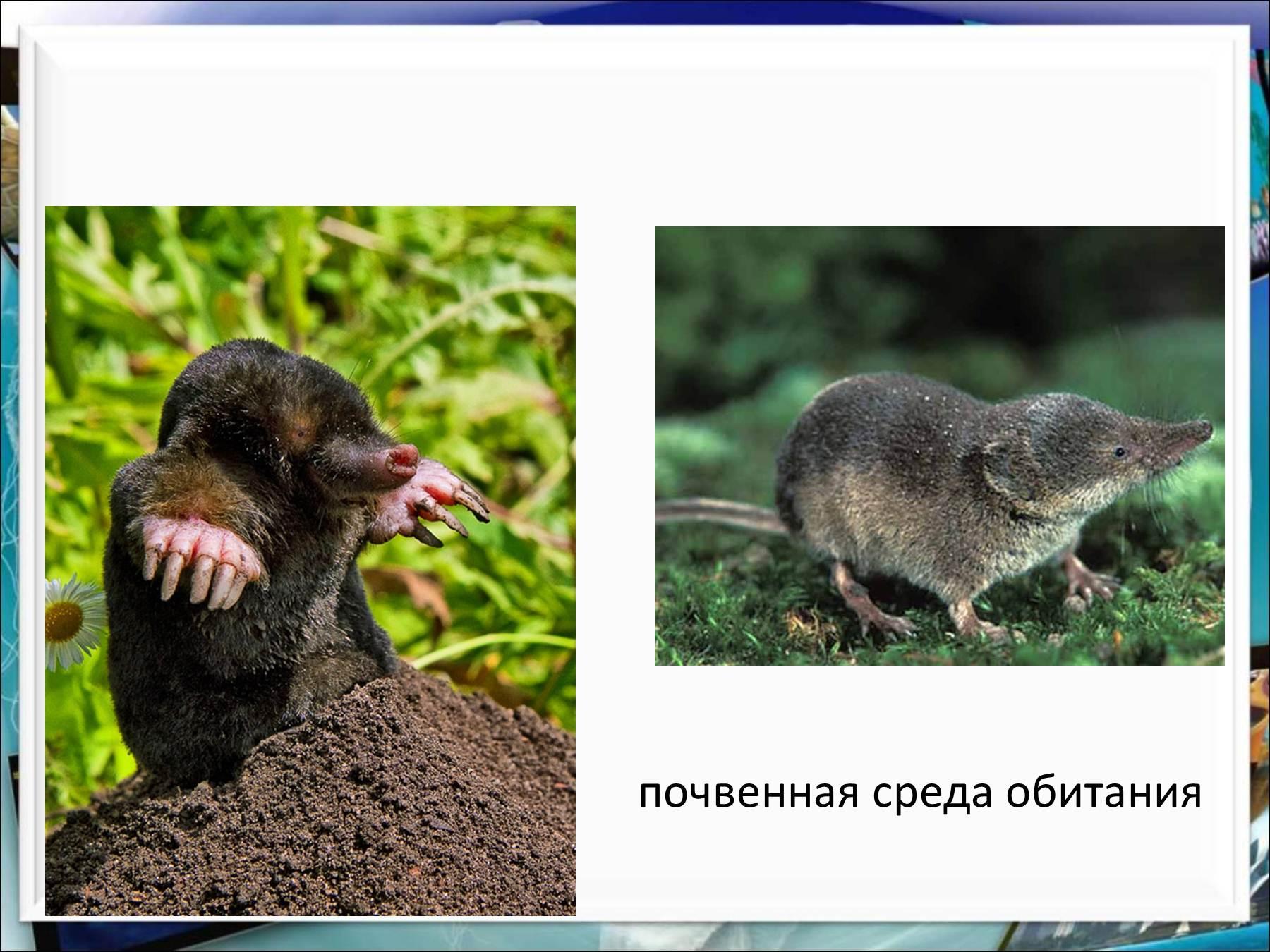 Животное в среде обитания рисунки 6