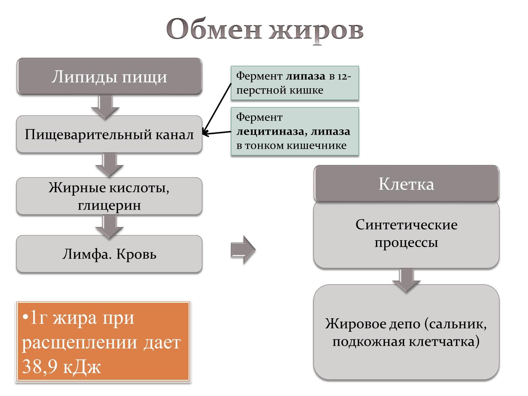 Схемы обмена углеводов и жиров