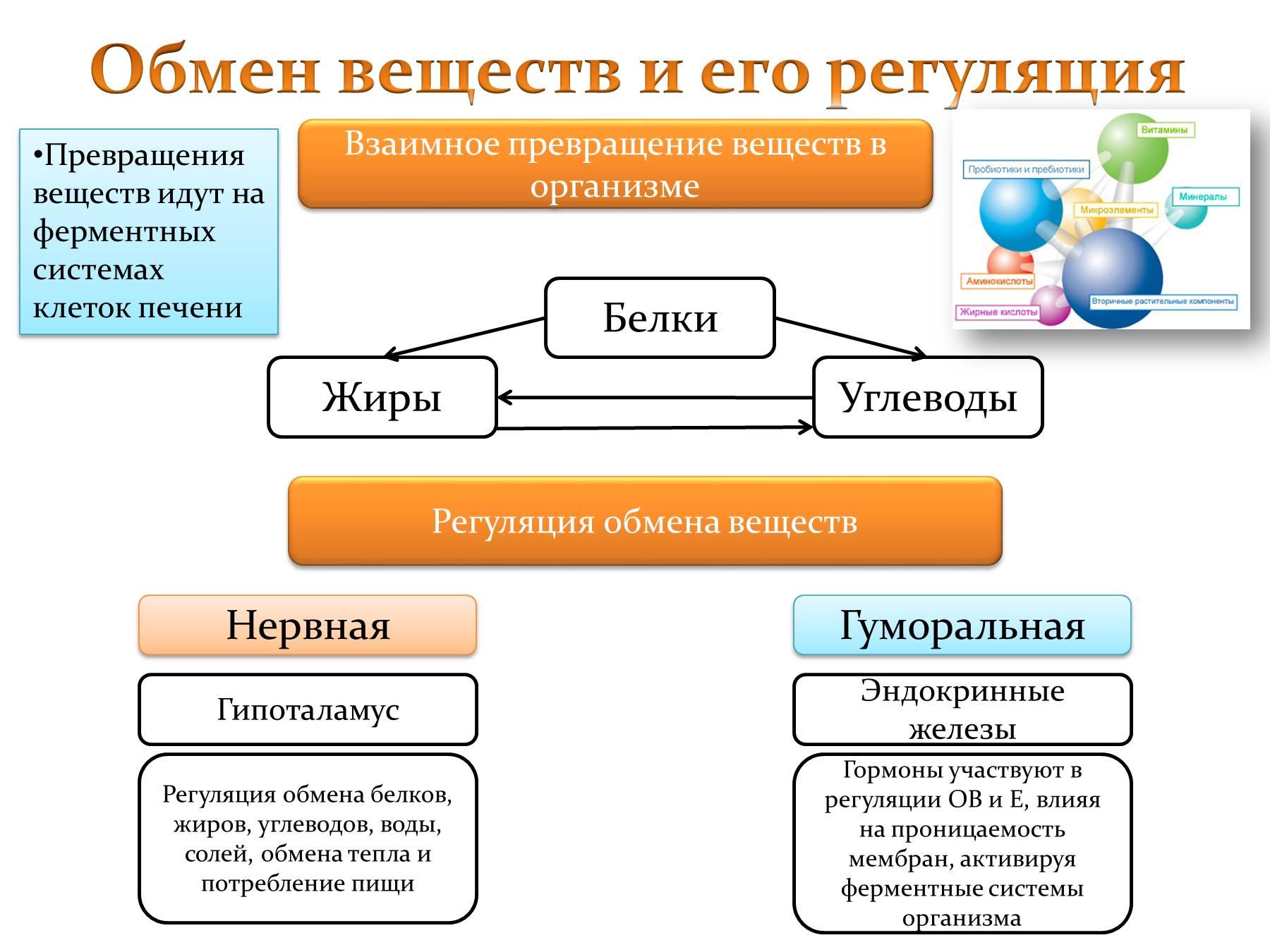 Схема превращения жиров