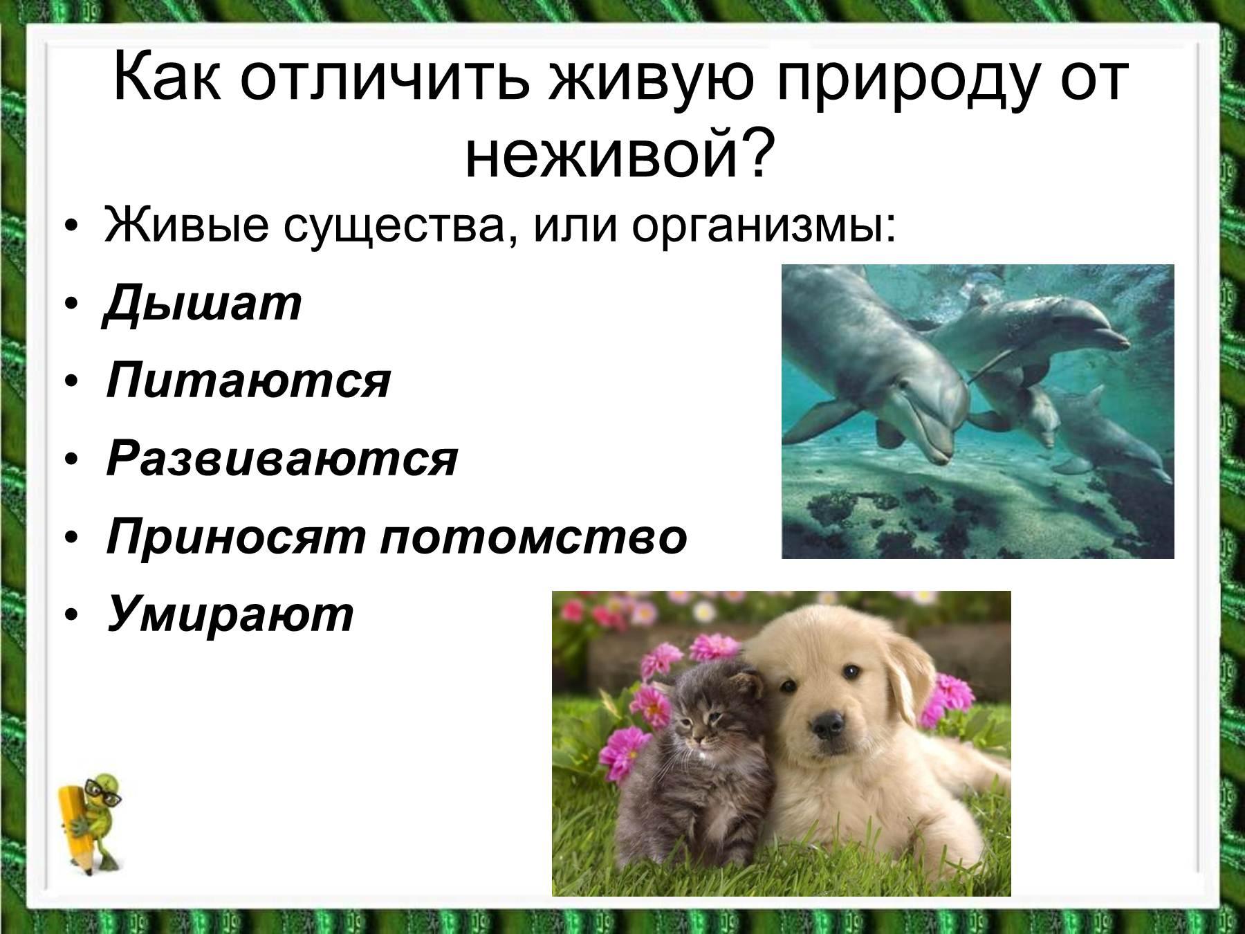 Живая  и неживая природа картинки 6