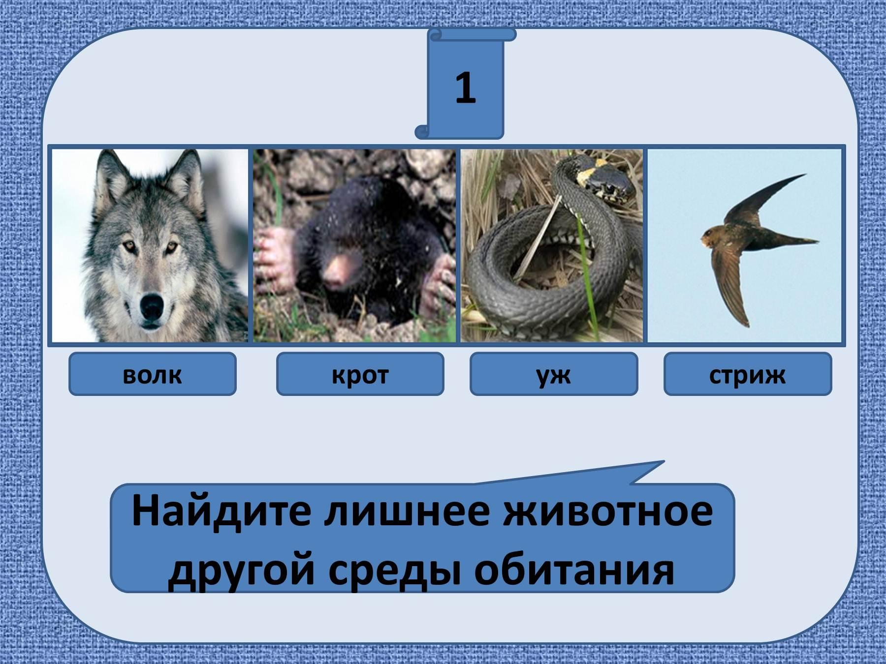 Животное в среде обитания рисунки 4