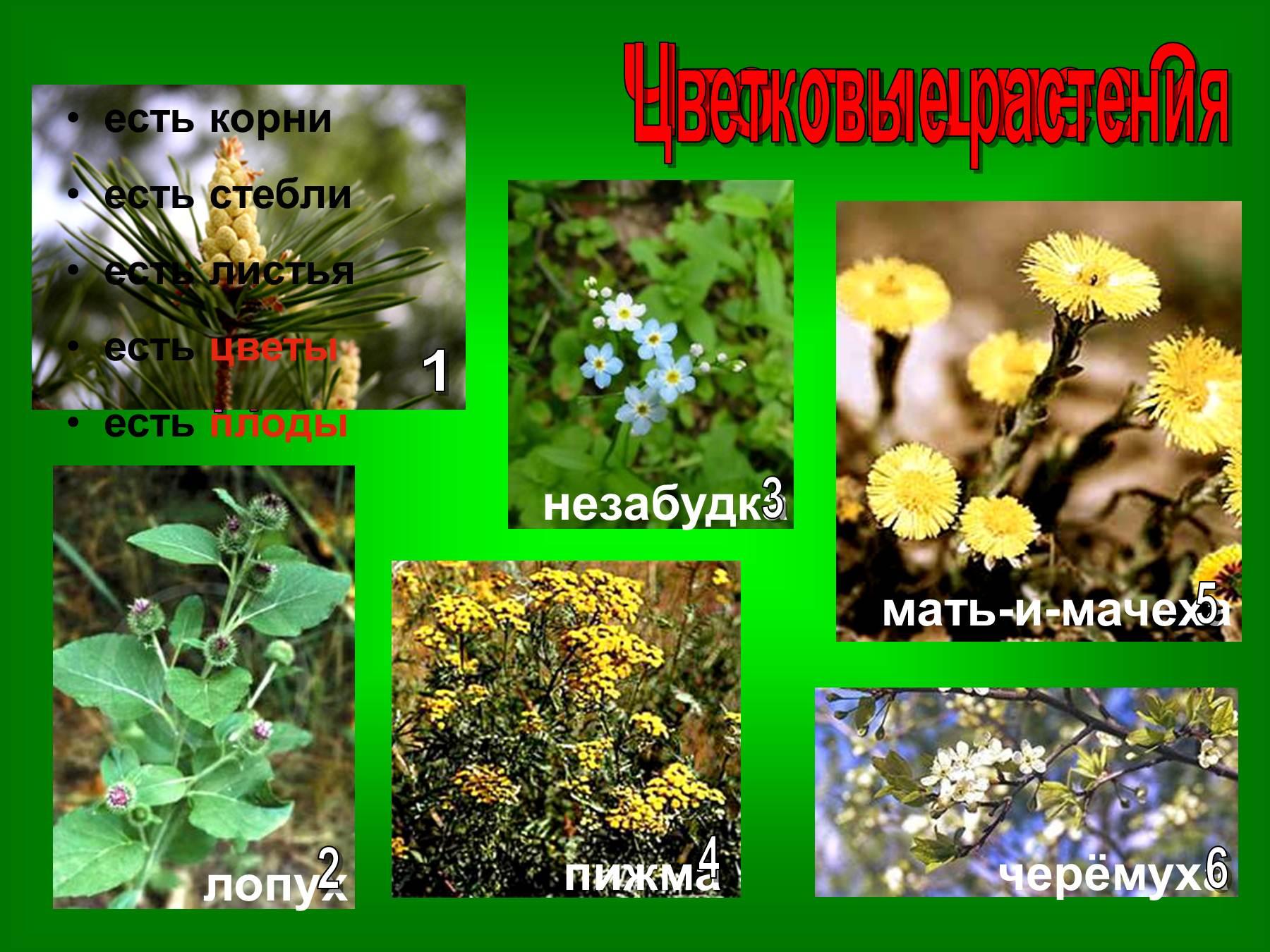 Виды цветковых растений фото