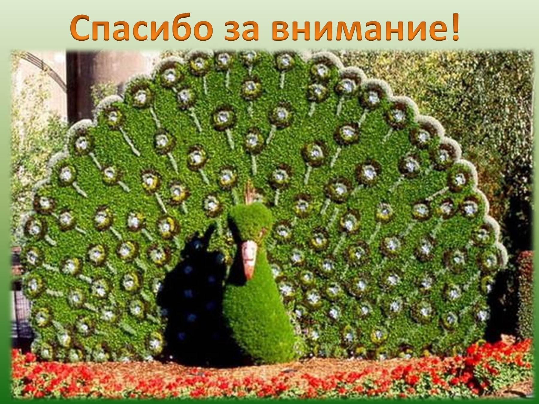 Павлин из живых цветов фото