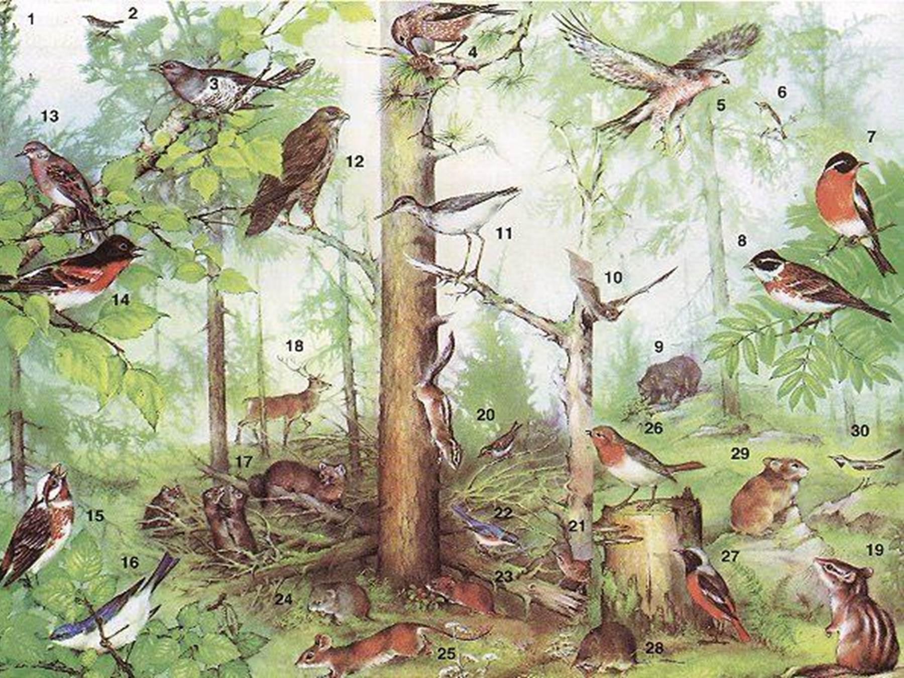 леса птицами знакомство с