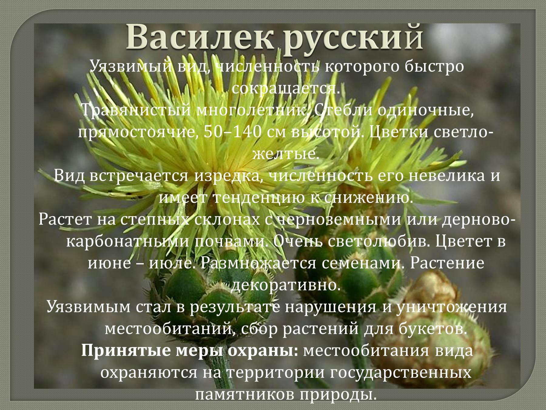 Тему исчезающие на растений презентацию виды