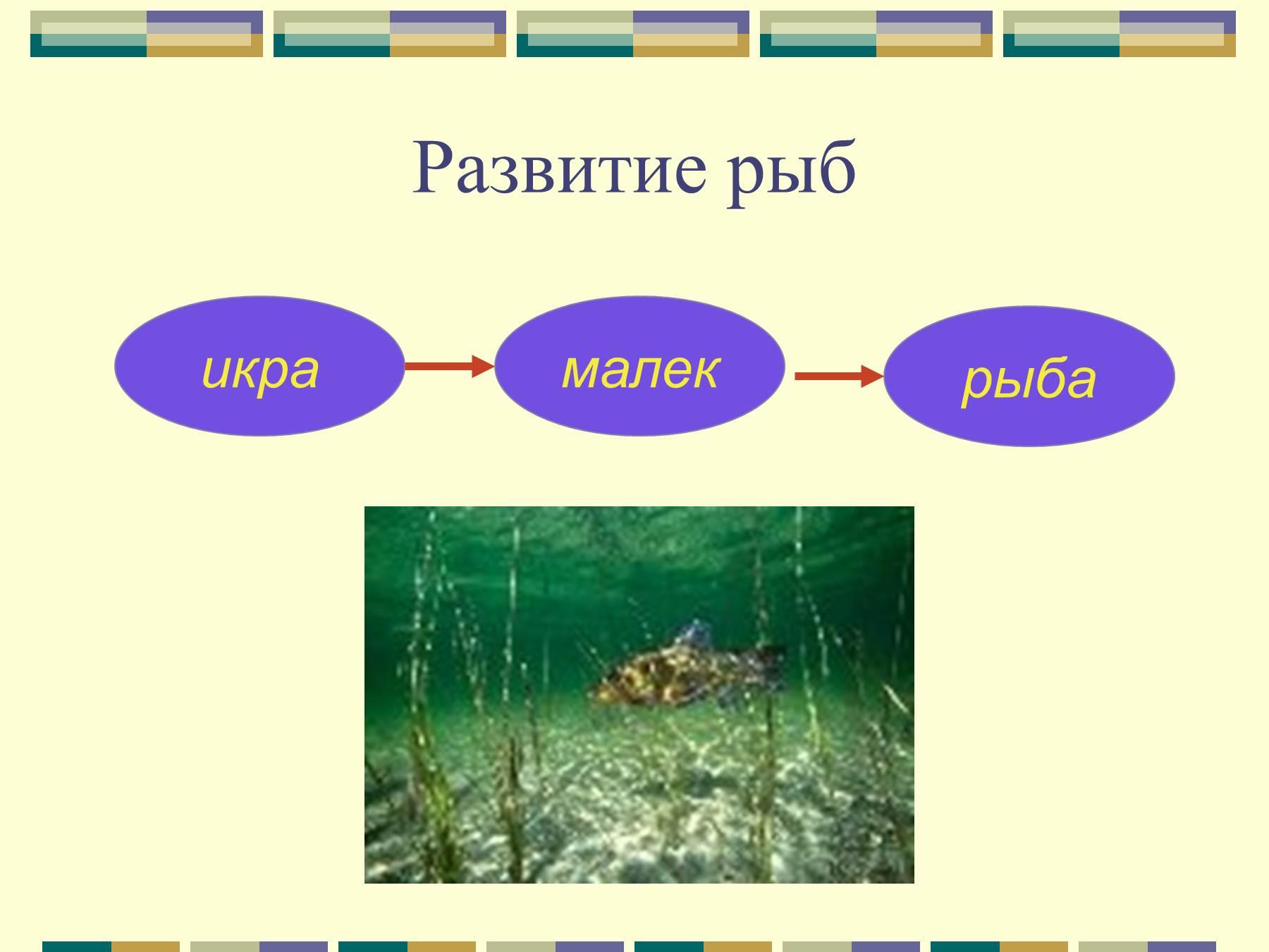 экология рыбалки эволюция