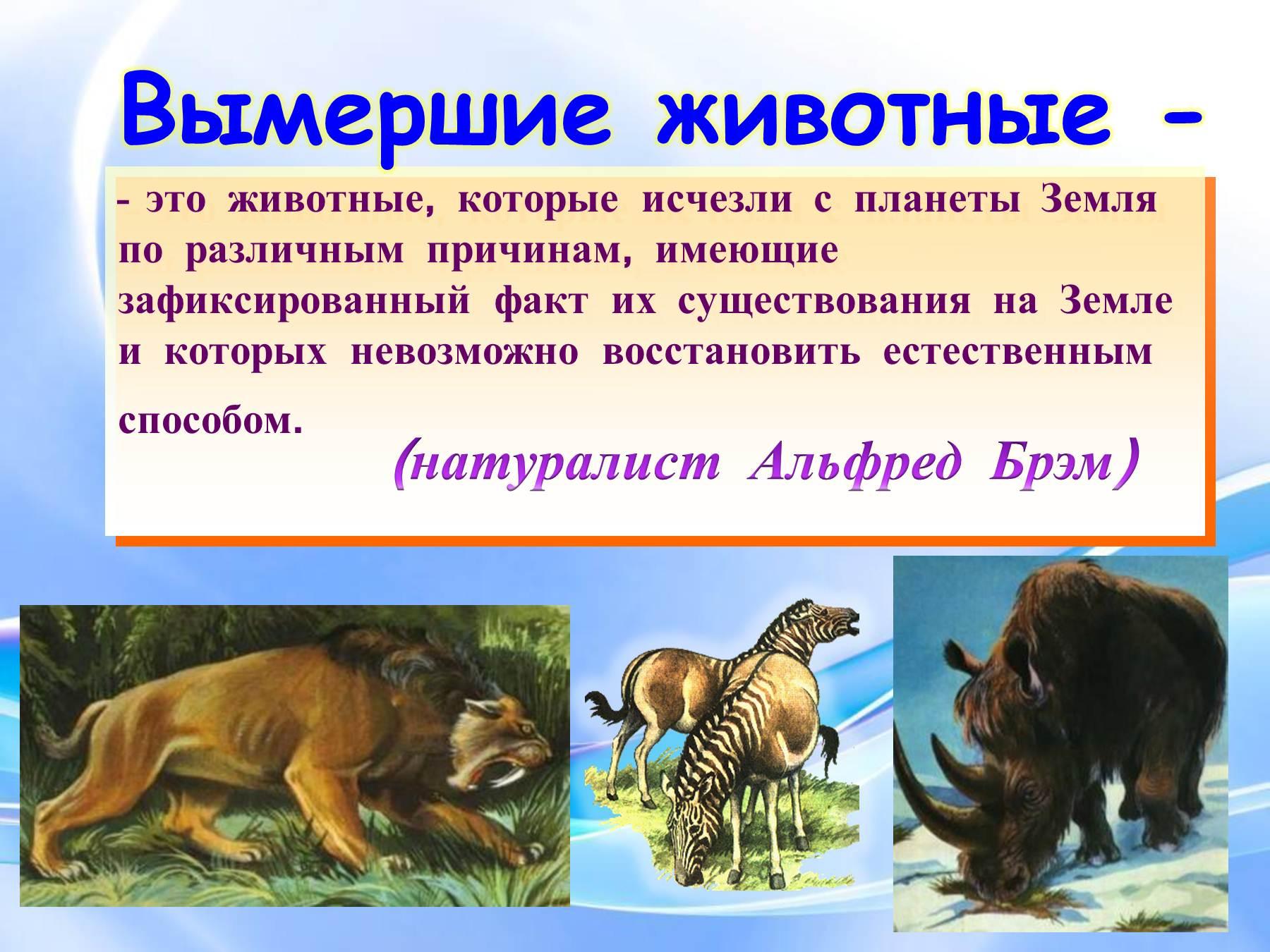 Животные википедия