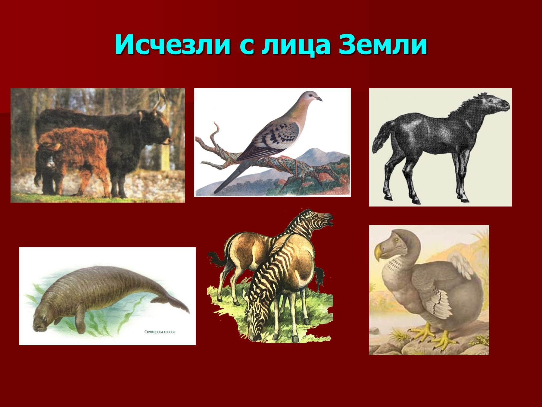 Что будет если исчезнут дикие животные
